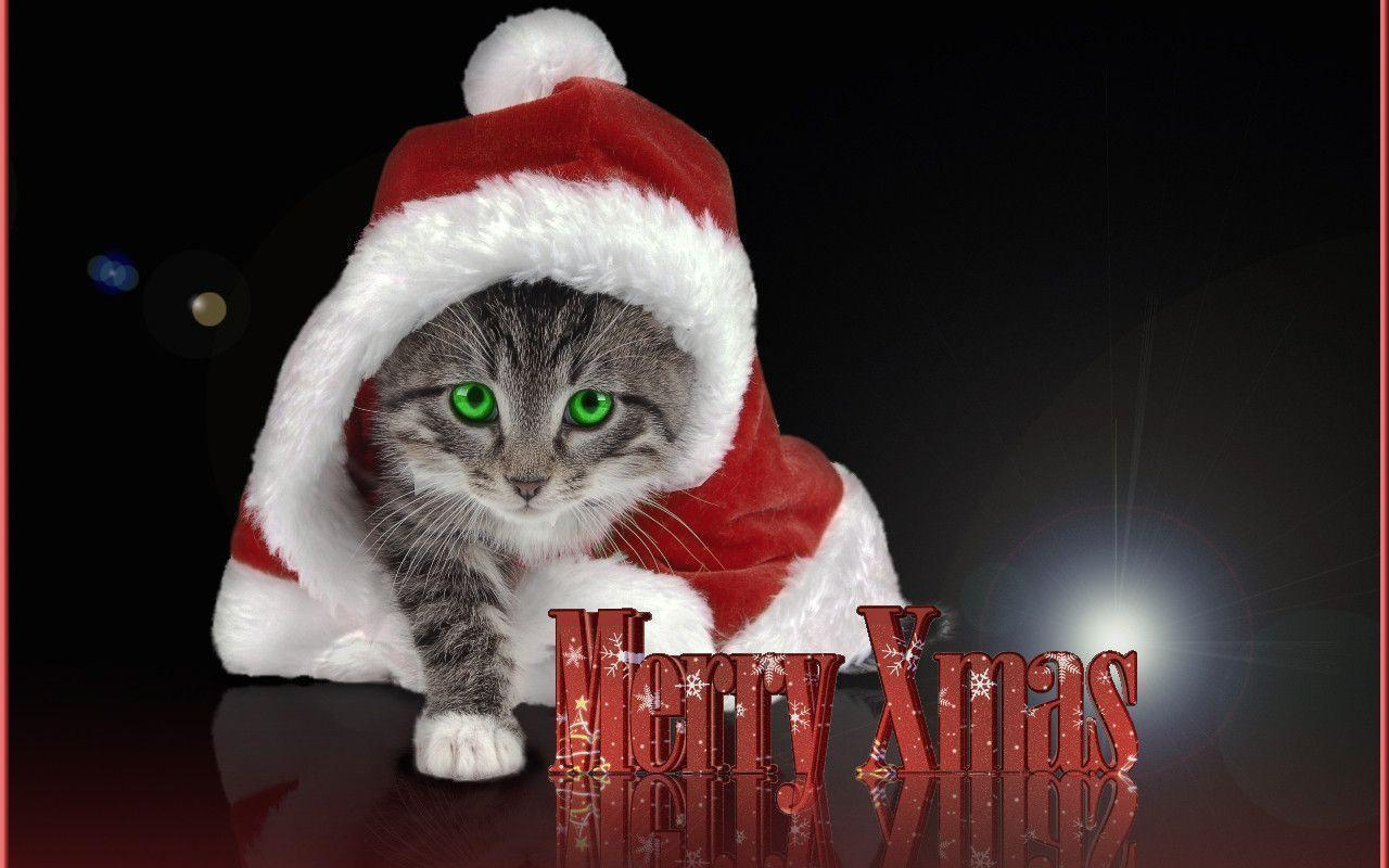 Christmas Kitty - Kittens Wallpaper (16096240) - Fanpop