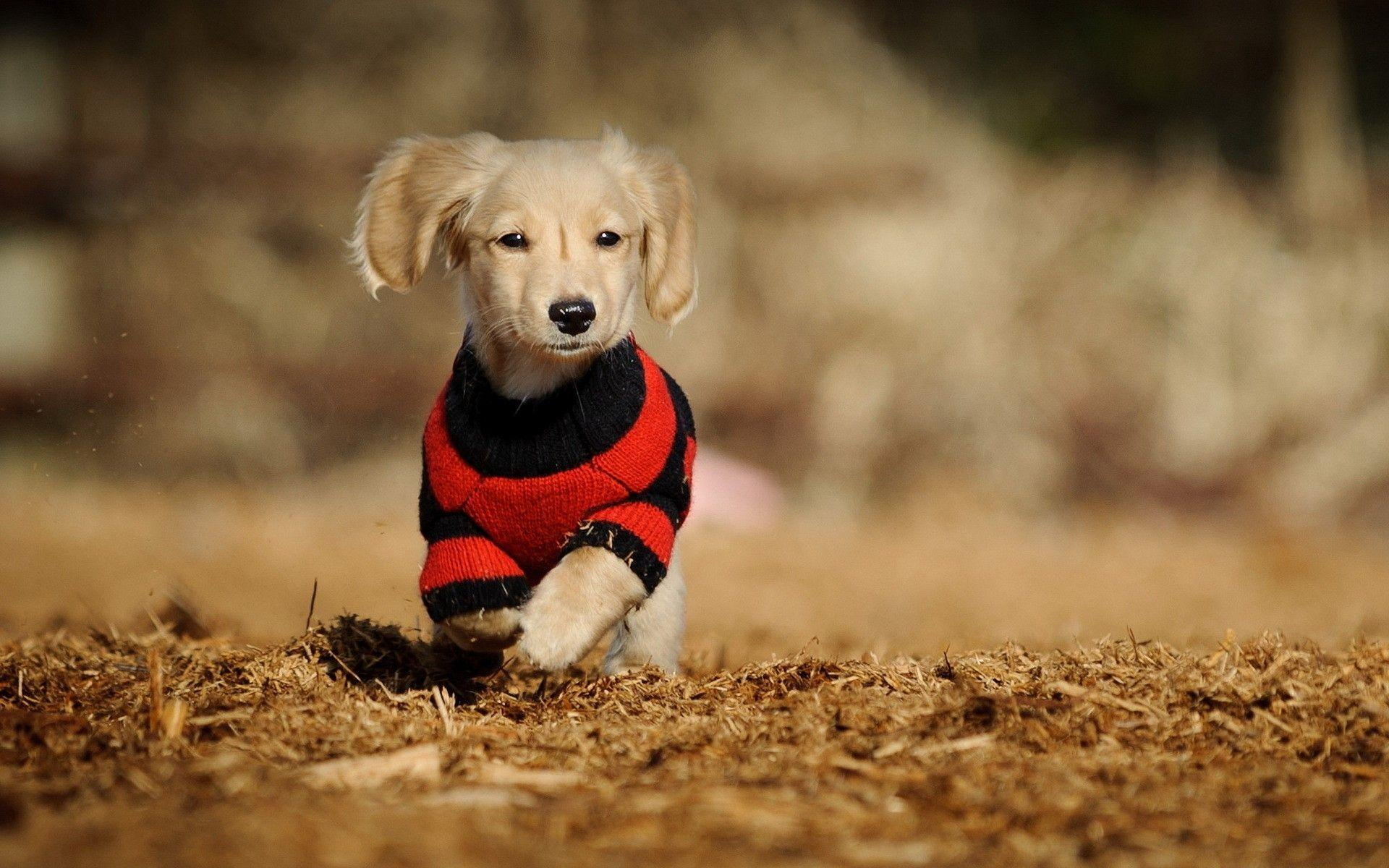 Cute Running Dog Wide Wallpapers Download Wallpapers from