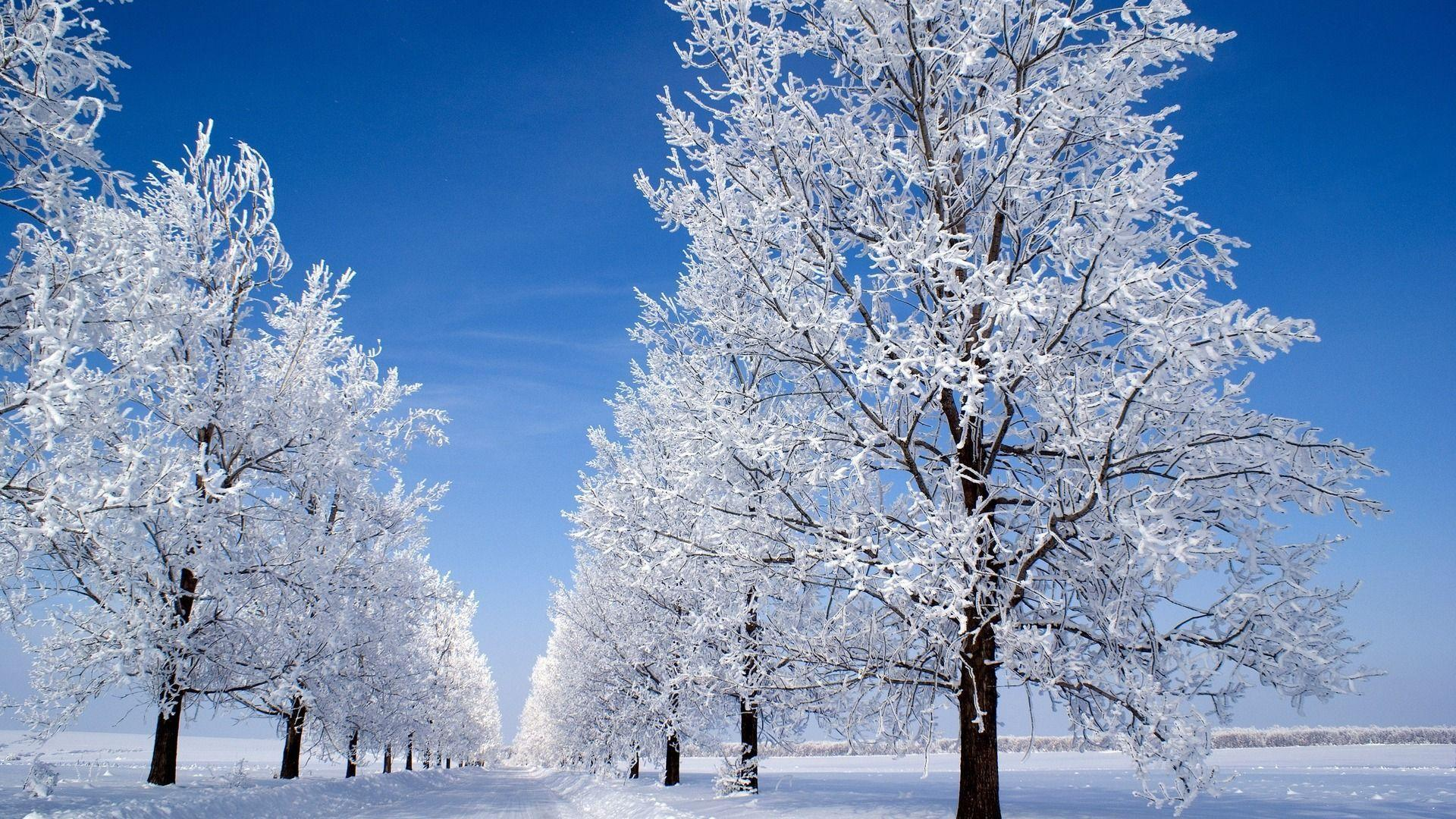 Nature & Landscape : Prepossessing Winter Snow on Trees Wallpapers
