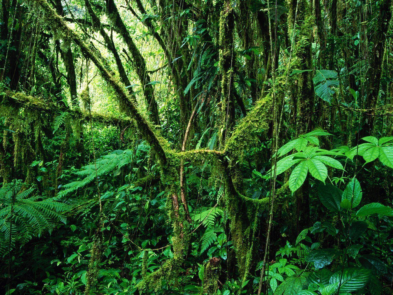rainforest backgrounds wallpaper cave
