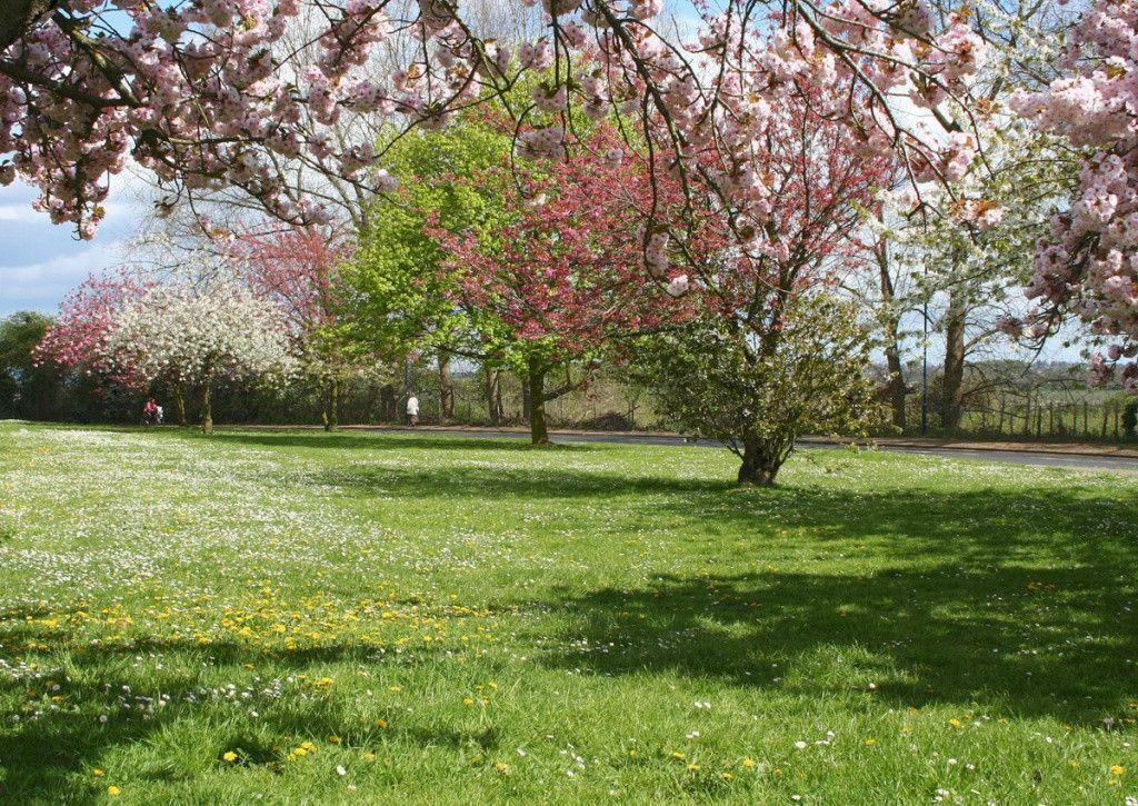 Free spring wallpapers and screensavers wallpaper cave for Arboles altos para jardin
