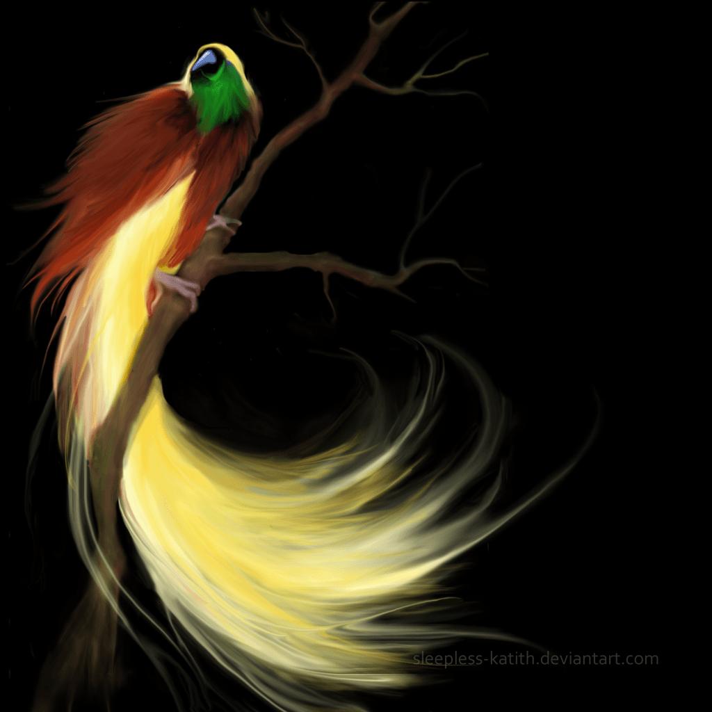 Bird Of Paradise Wallpapers Wallpaper