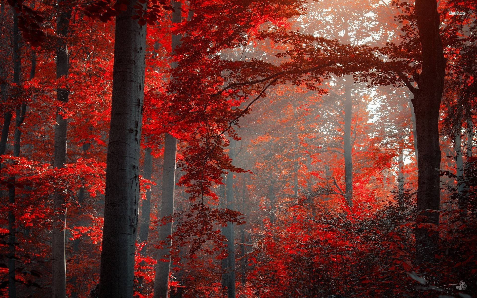 red fall wallpaper - photo #17