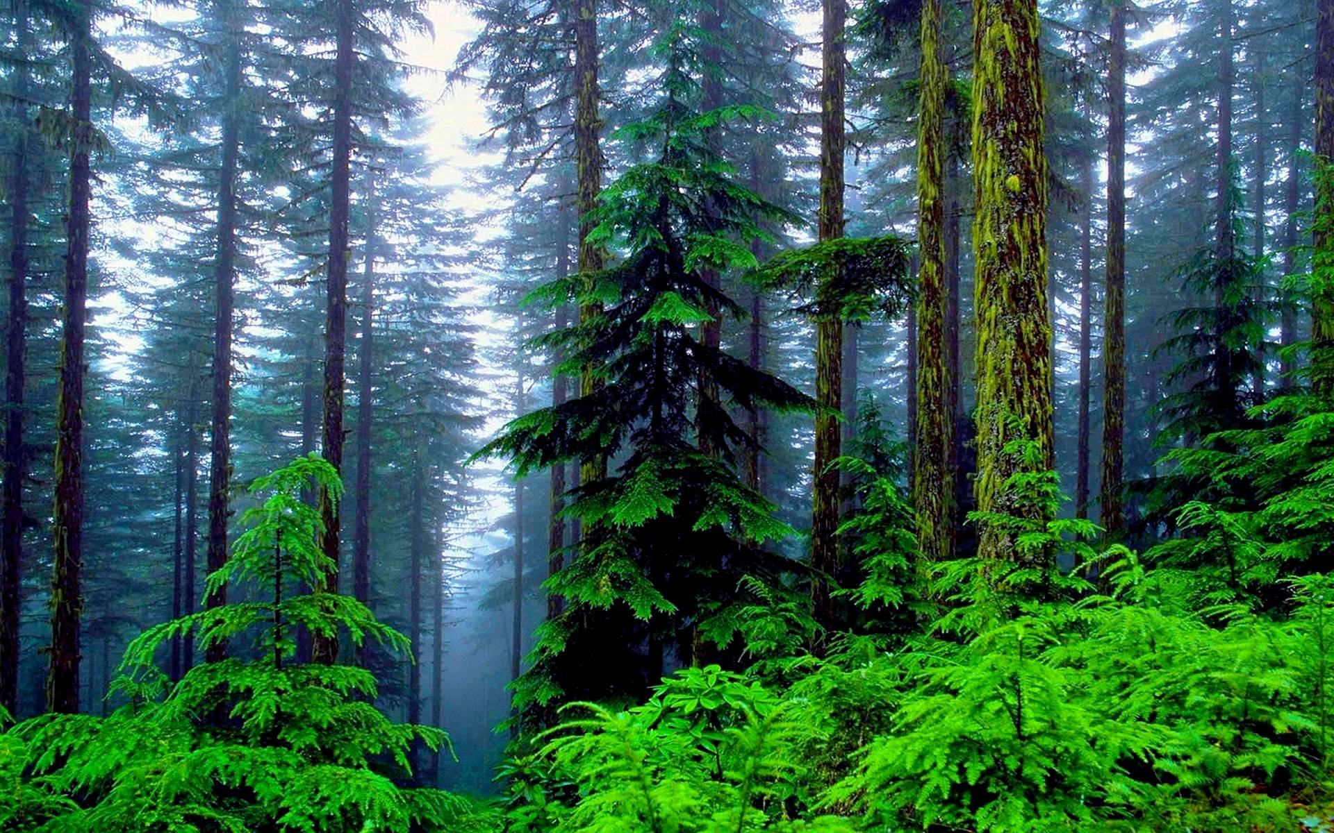 green tree forest - photo #48
