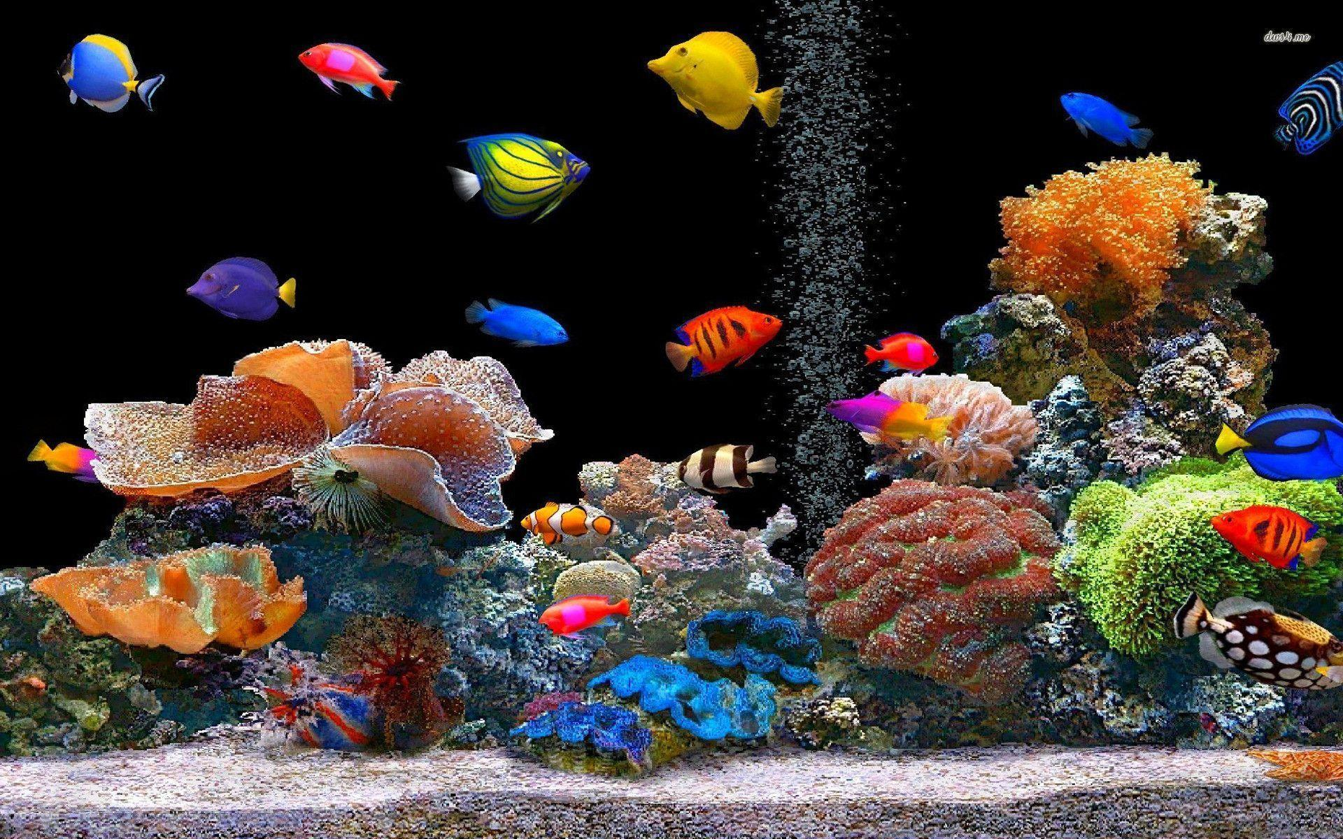 Pin Colorful Fish Wallpapers Beautiful Desktop Pictures Free on