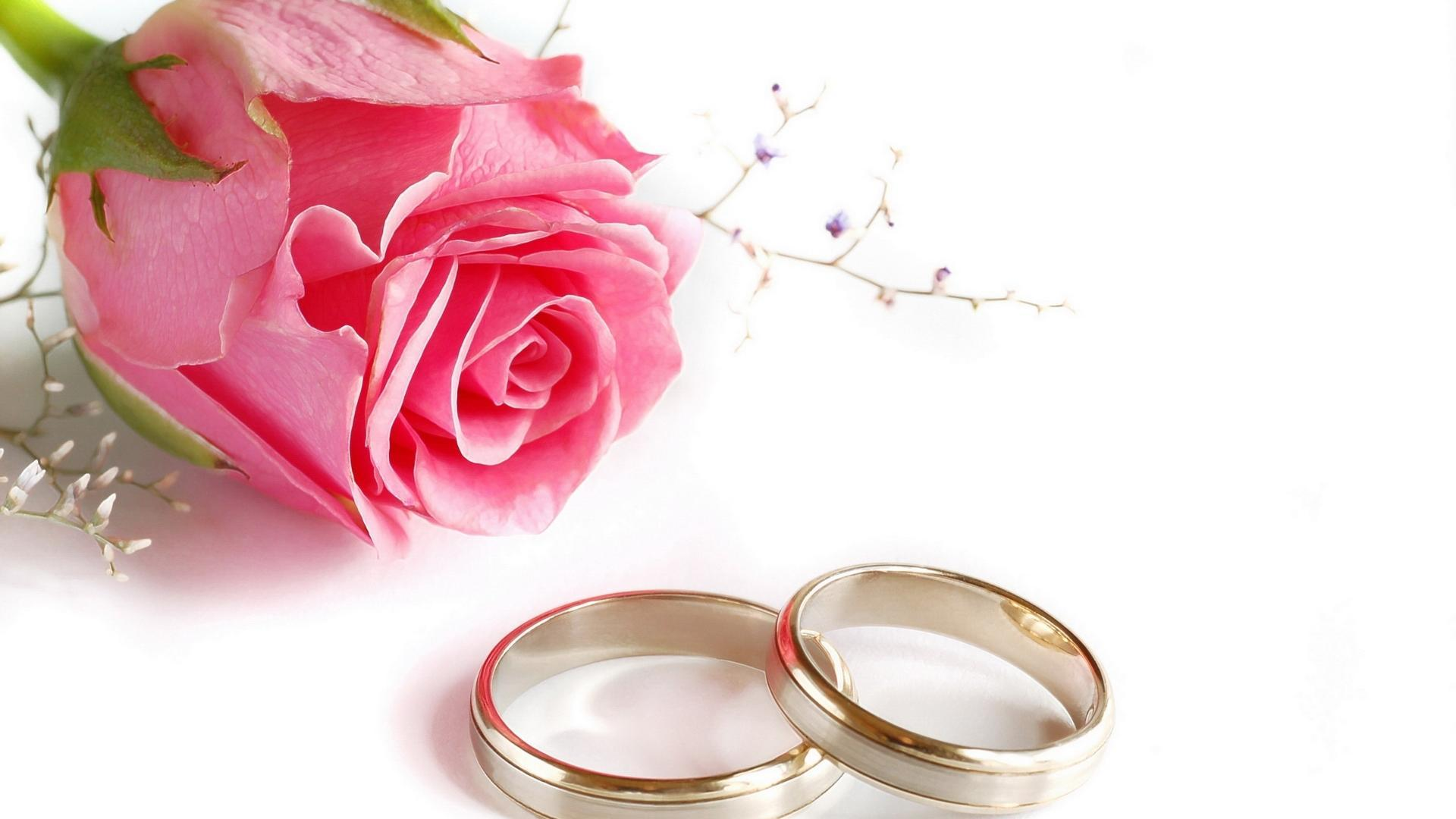Wedding Rings Rose Flower Hd Wallpaper Backgrounds Smadata