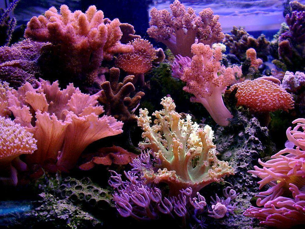 LINKS- REEF AQUARIUM PICTURES OF THE WEEK