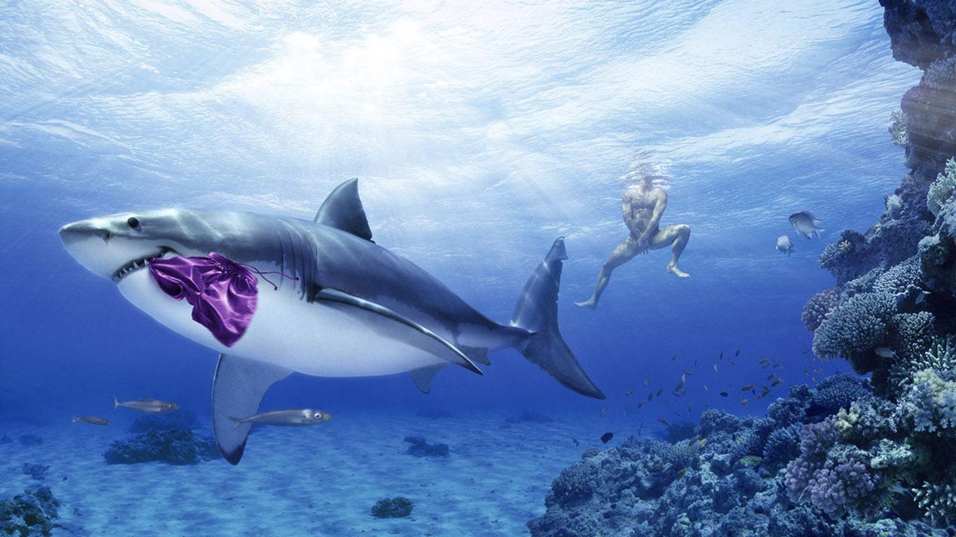 download shark wallpapers wallpaper - photo #6