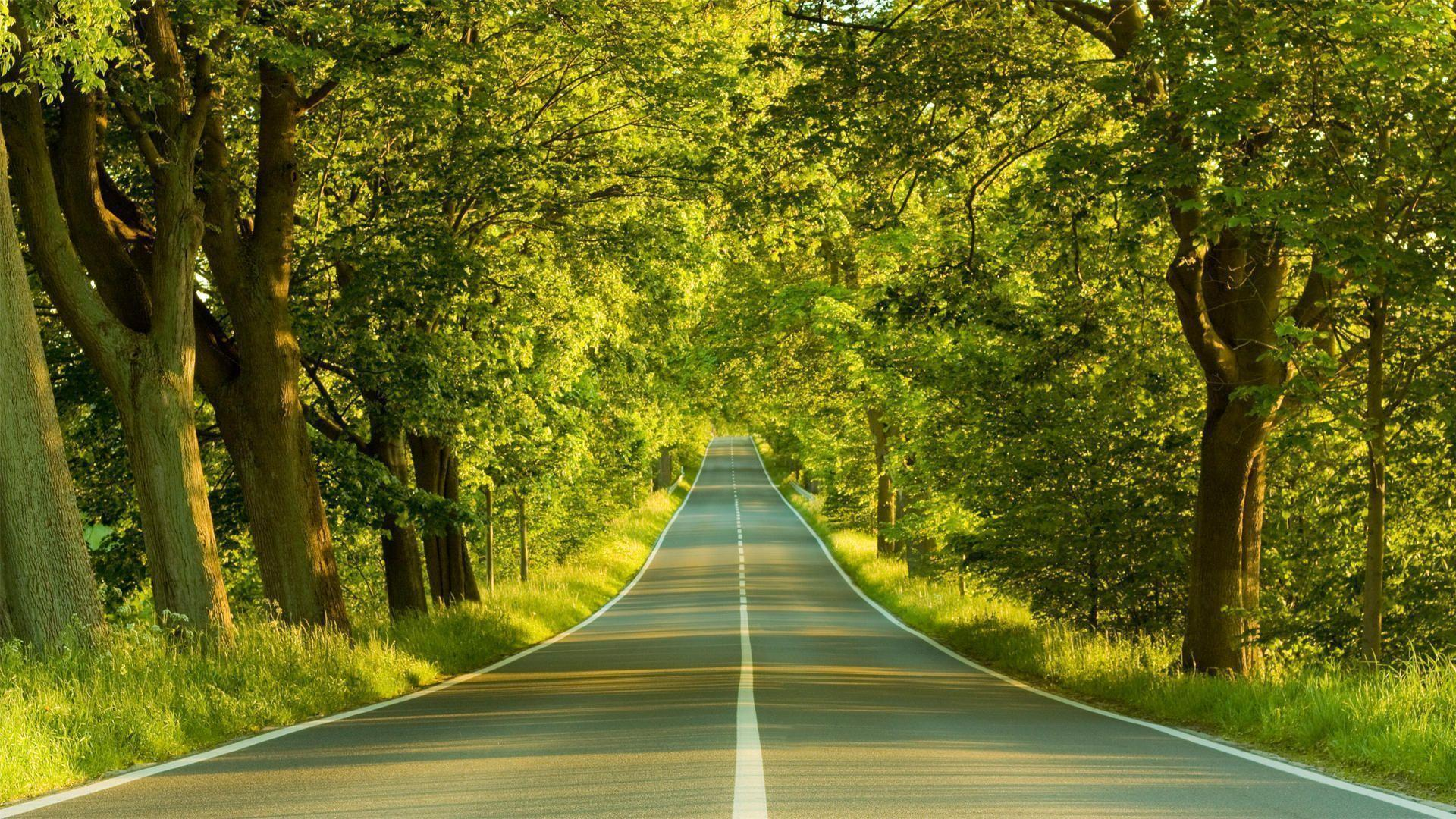 Long Forest Road Wallpapers HD Wallpapers