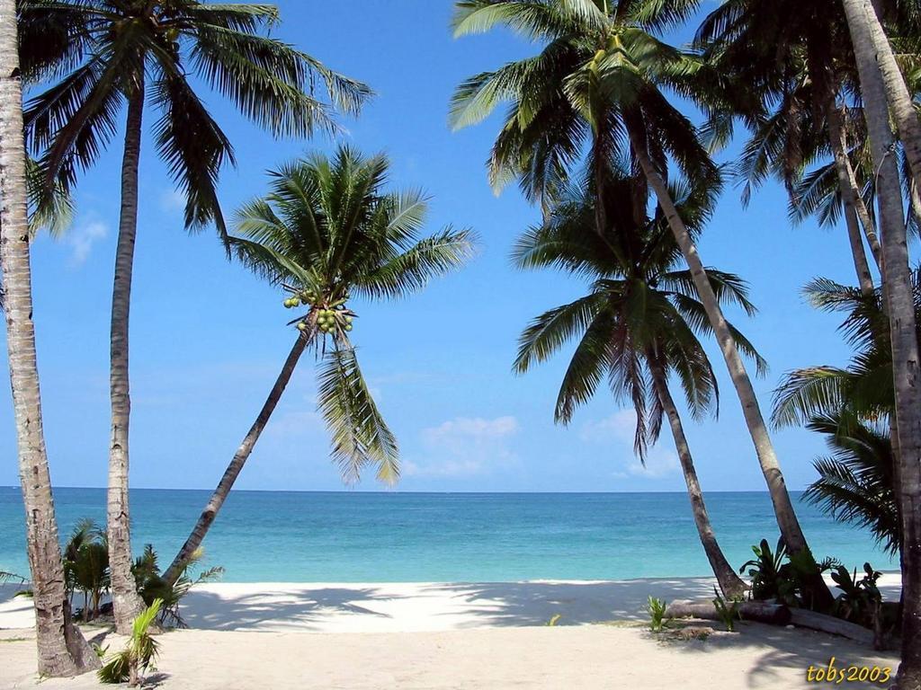 Palm Tree Beach Sunset