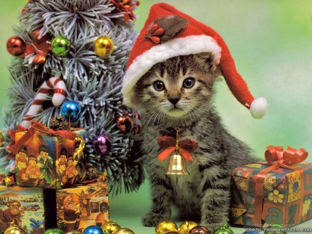 Christmas Kitten. - Cats Wallpaper (36711832) - Fanpop