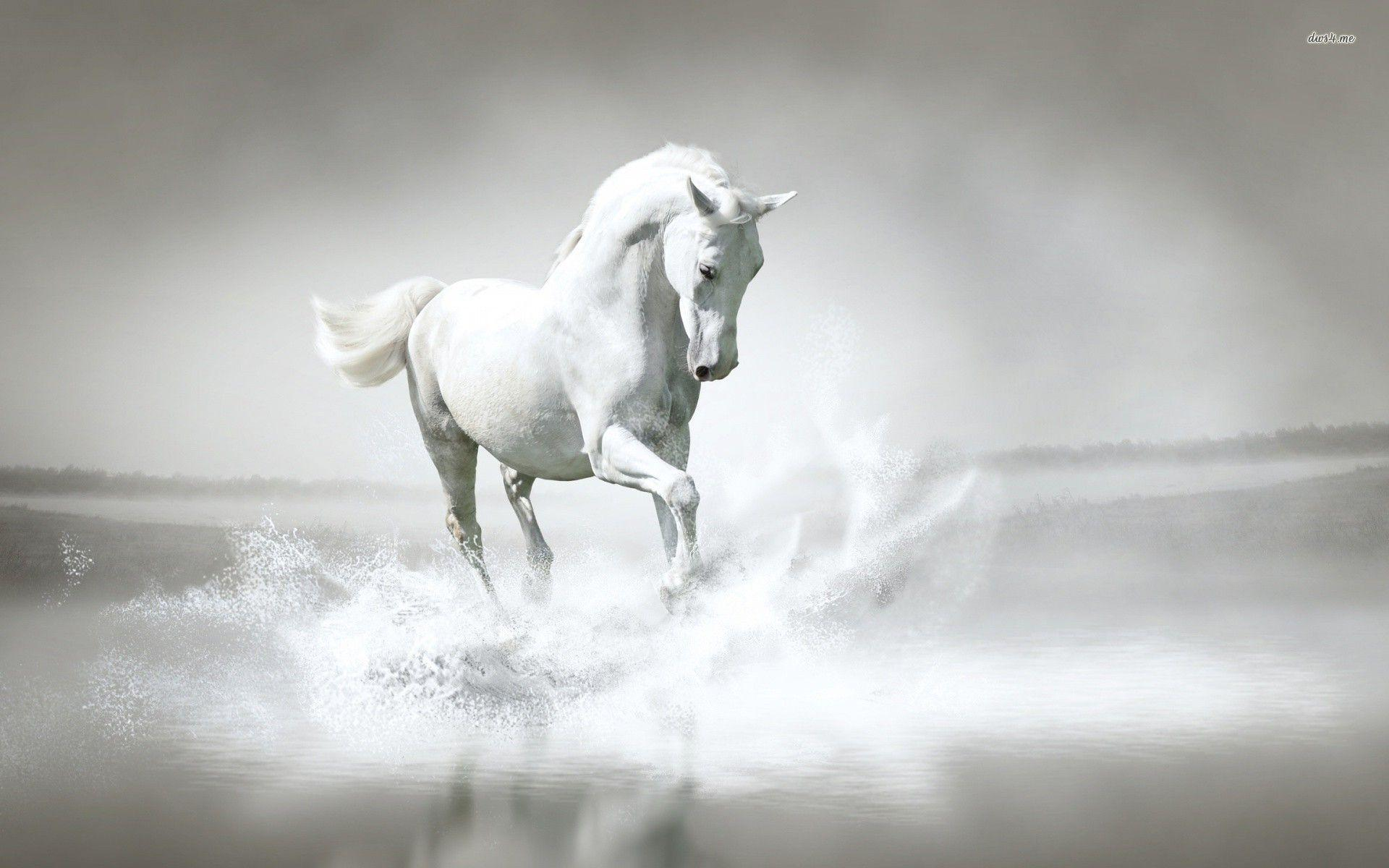 Pure White Horse HD Wallpapers