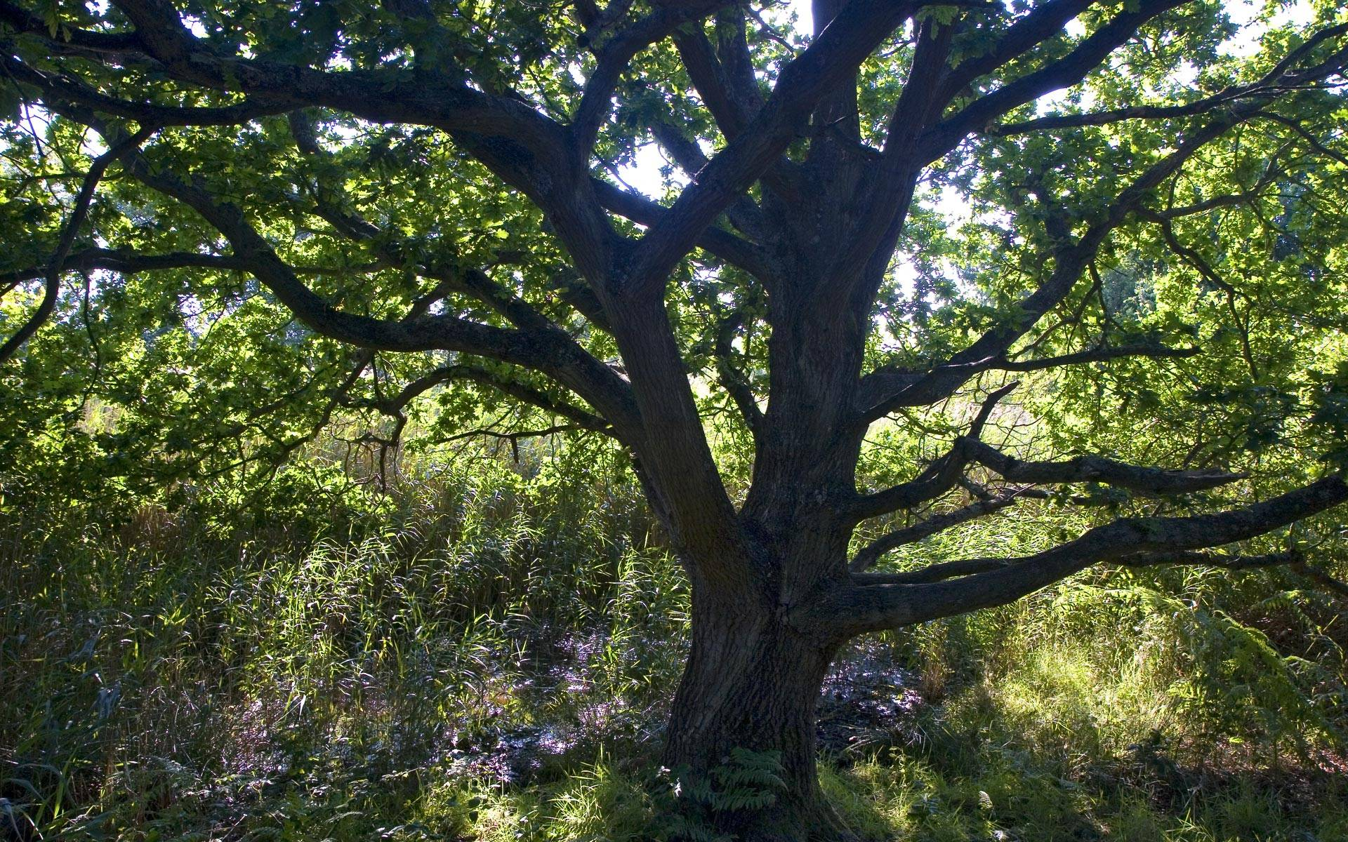 tree desktop background - photo #8