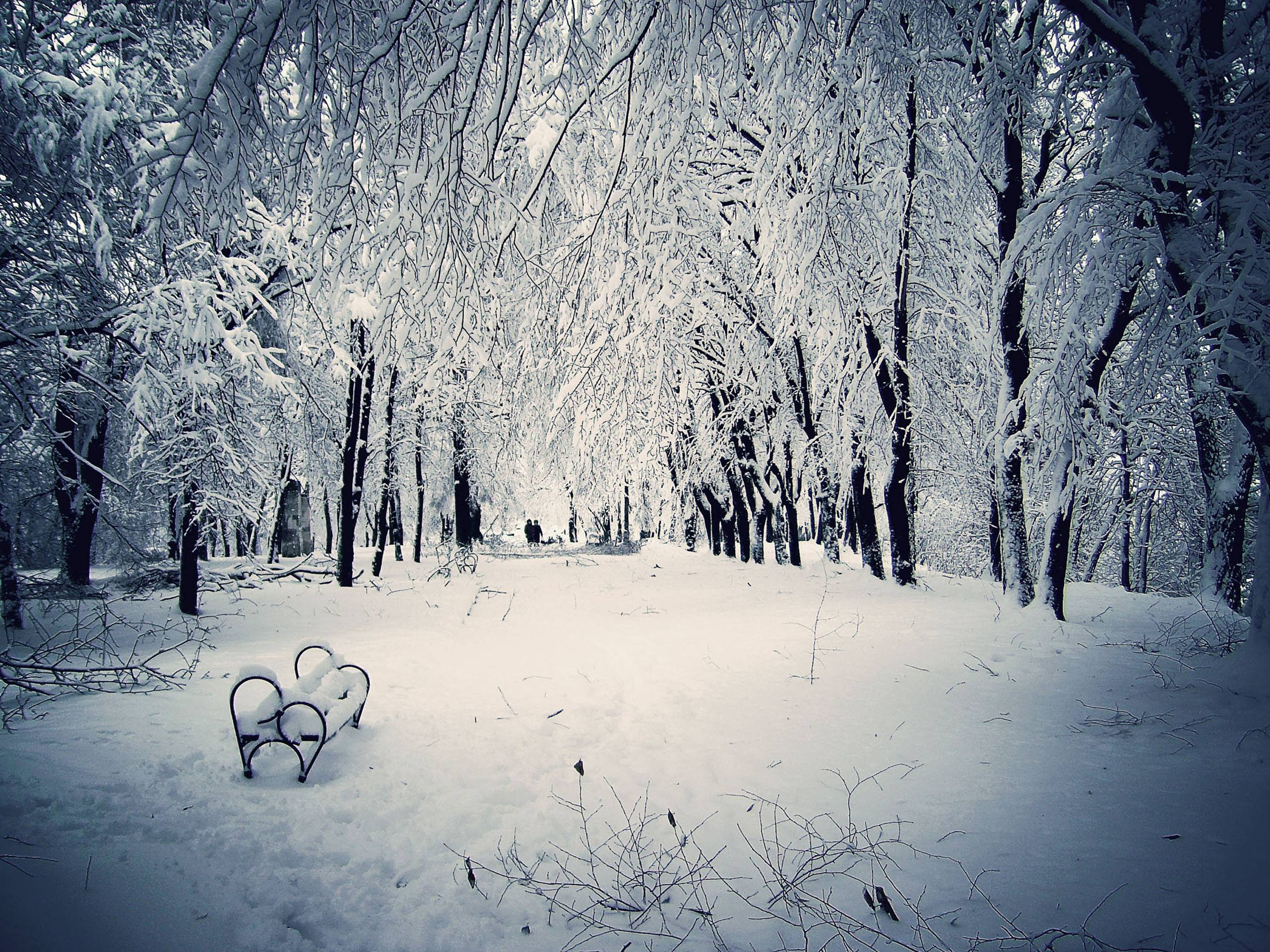 Snowy Scenes Wallpapers