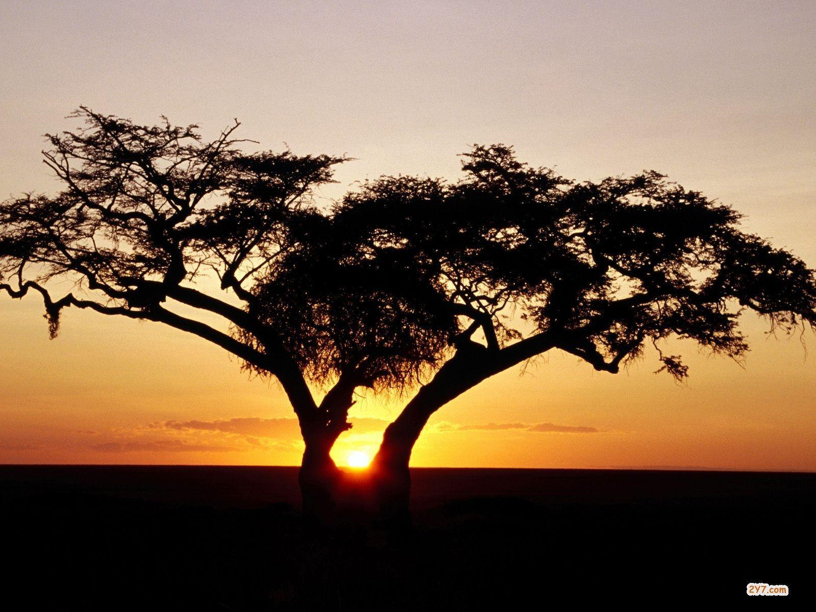 African Safari Wallpapers and Background