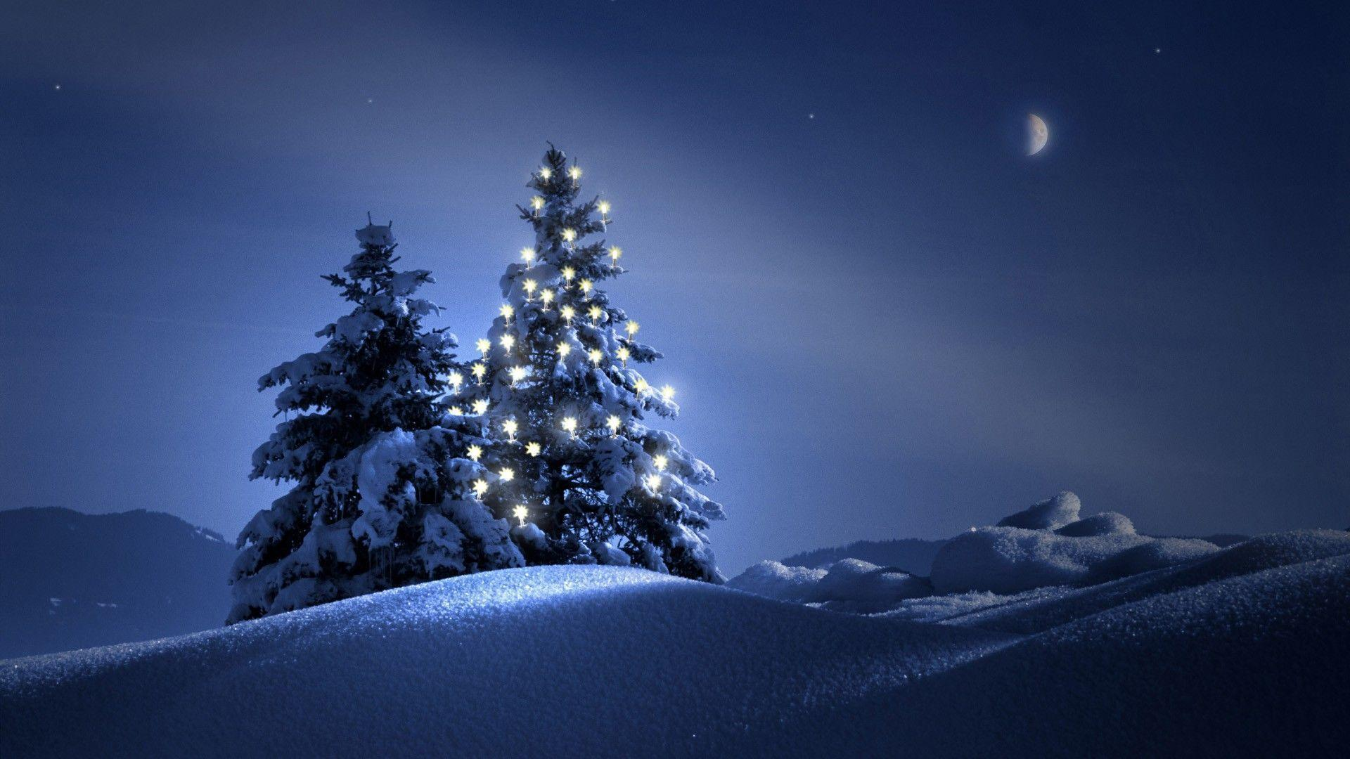 Christmas Tree On Snow Wallpapers Wide Wallpapers