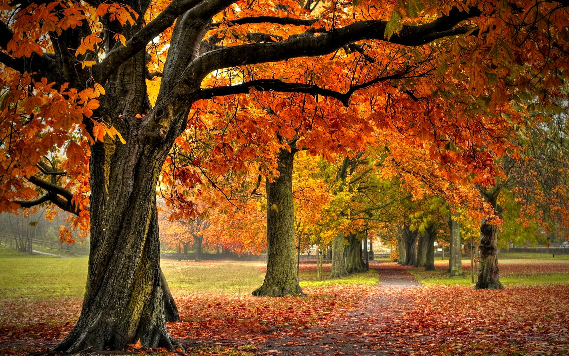 Autumn Forest Wallpapers - Wallpaper Cave