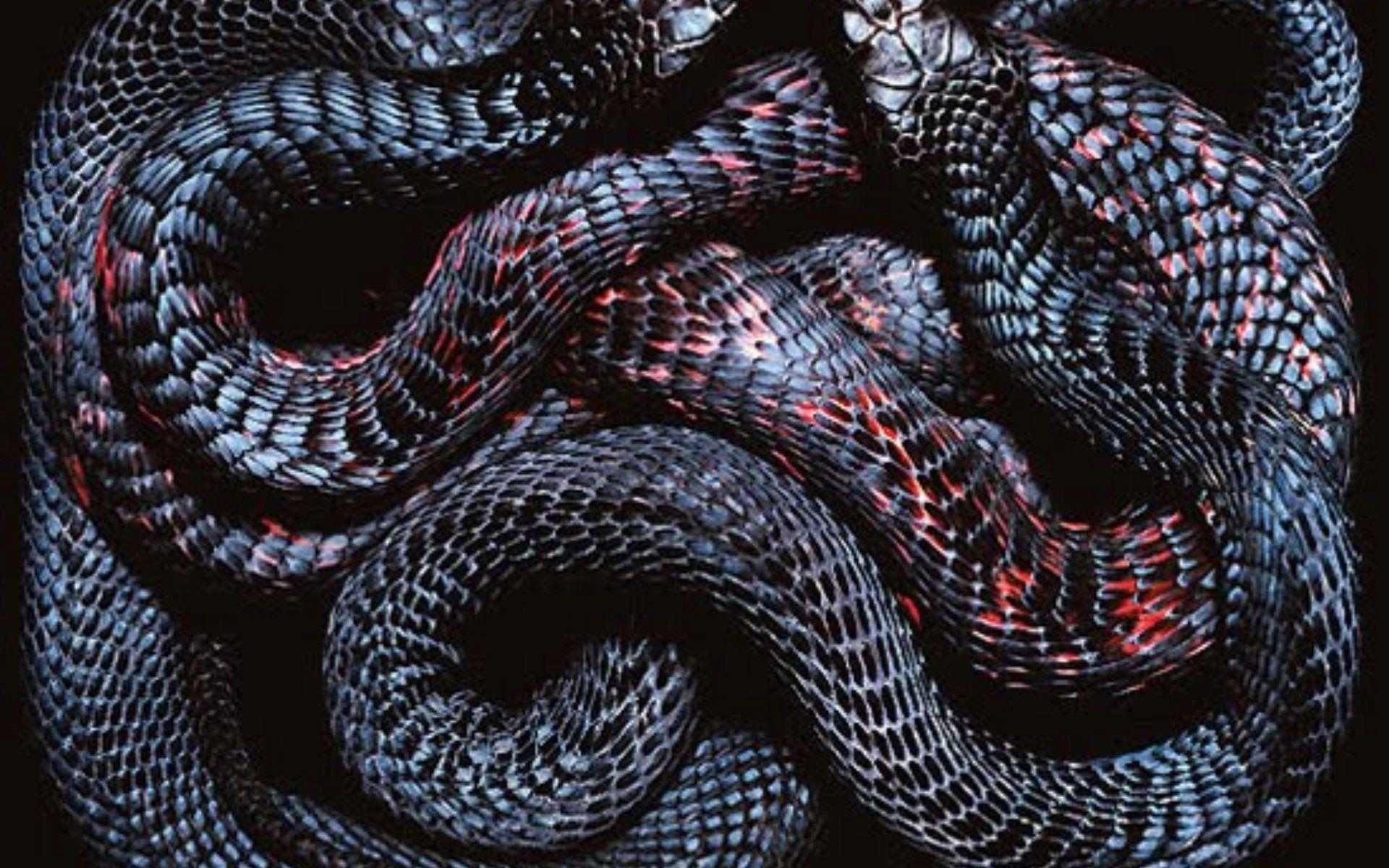 Snakes Wallpapers Wallpaper Cave HD Wallpapers Download Free Images Wallpaper [1000image.com]