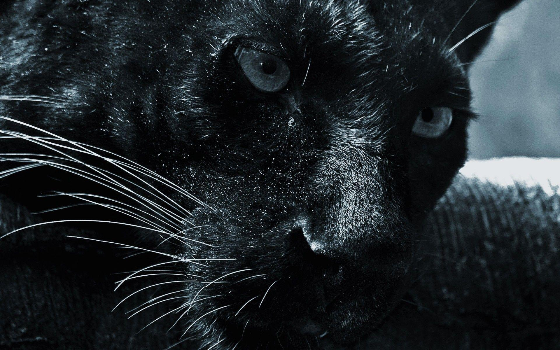 black leopard backgrounds - photo #20