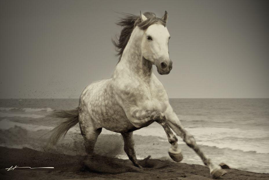 amazing galloping horses 1080p hd wallpaper