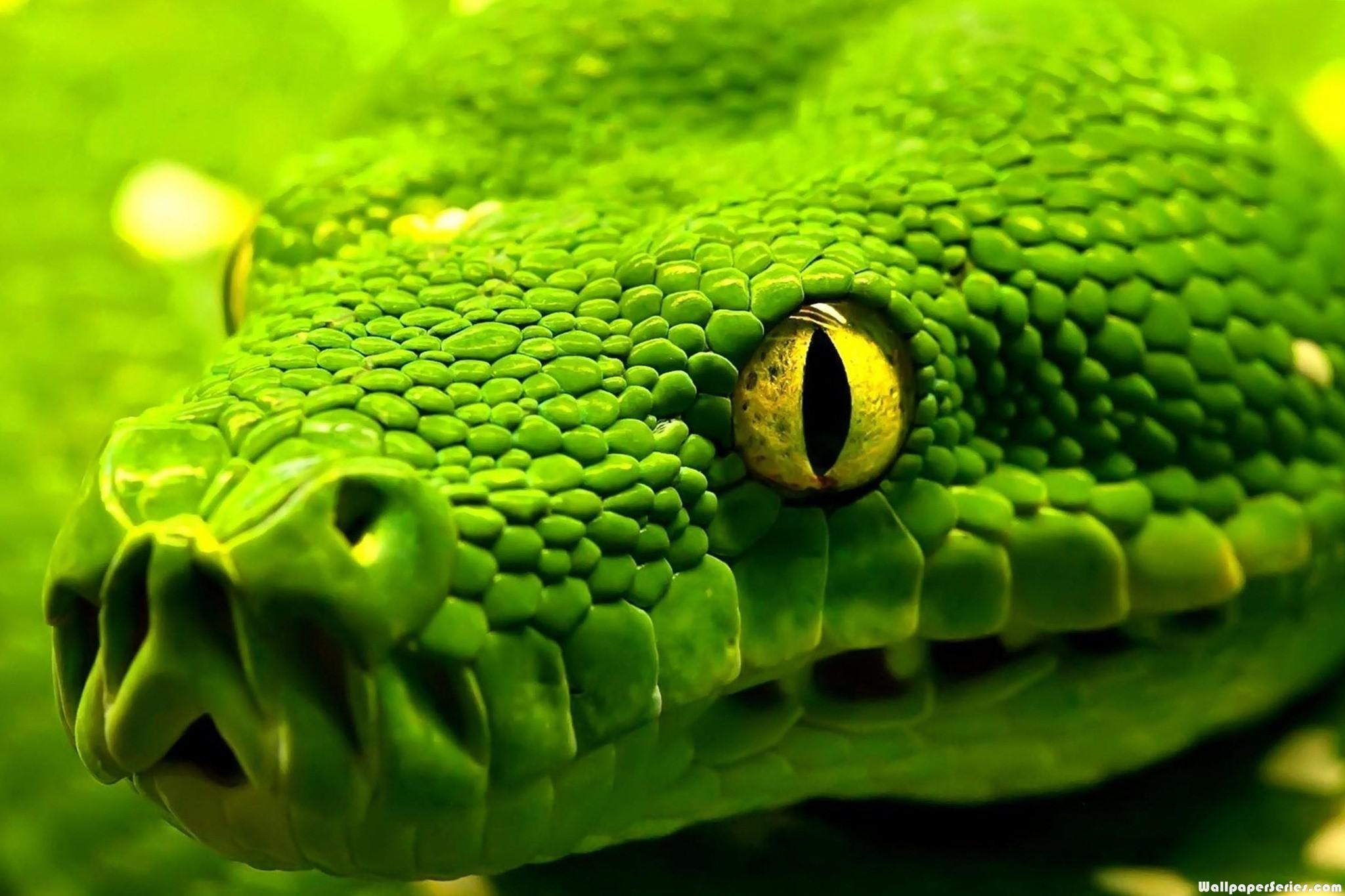 HD Snake Cool Wallpapers