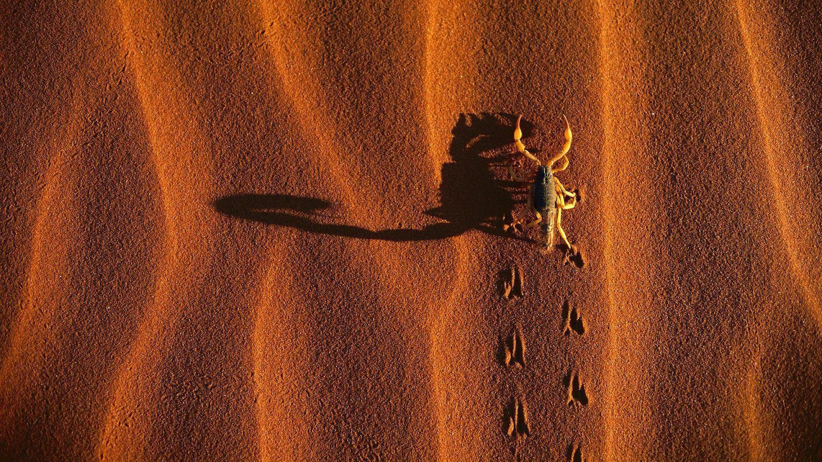 Scorpion Animal Wallpapers 12 Image 1600x900 HD Wallpapers for