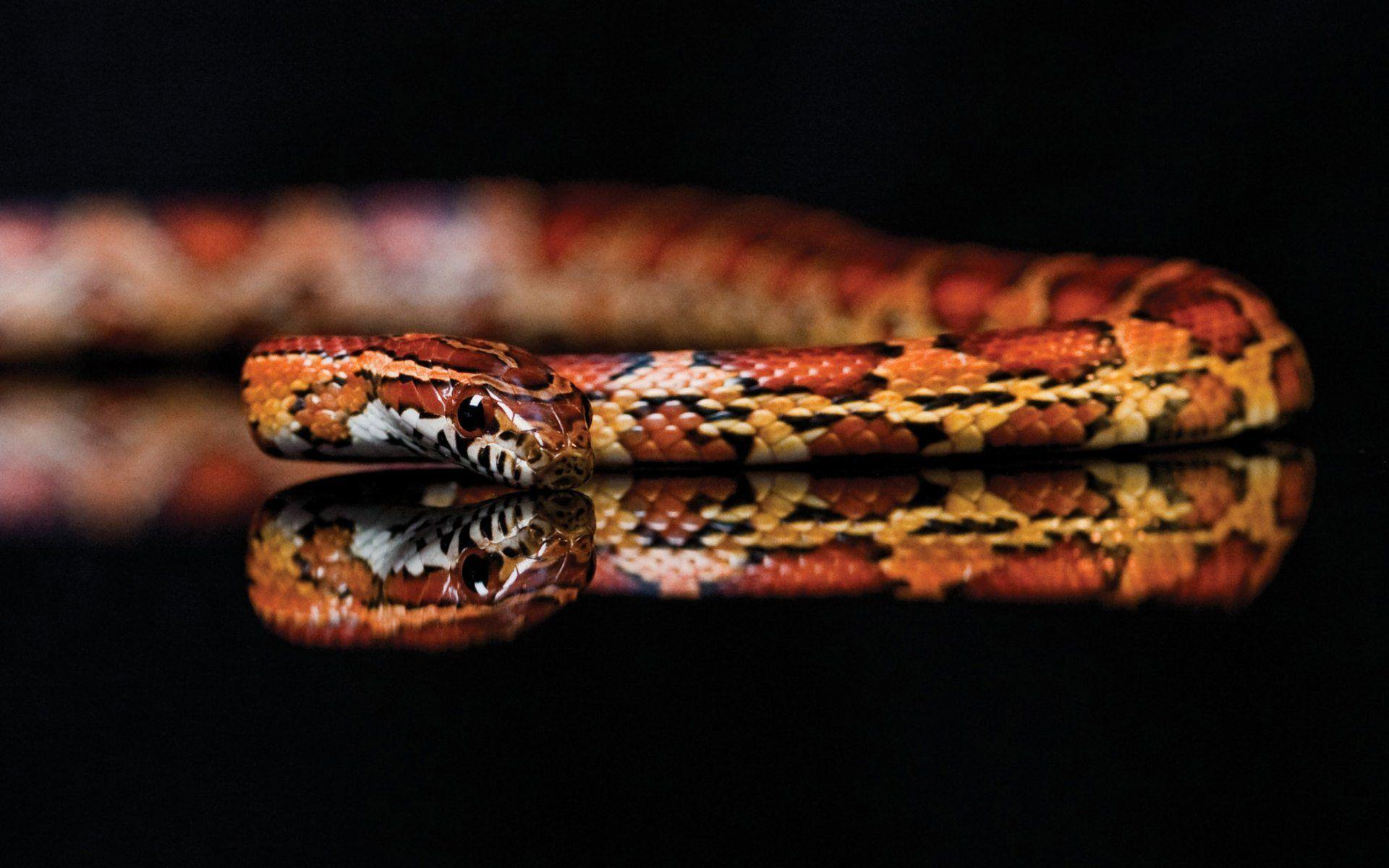 Snakes Wallpapers - Wallpaper Cave