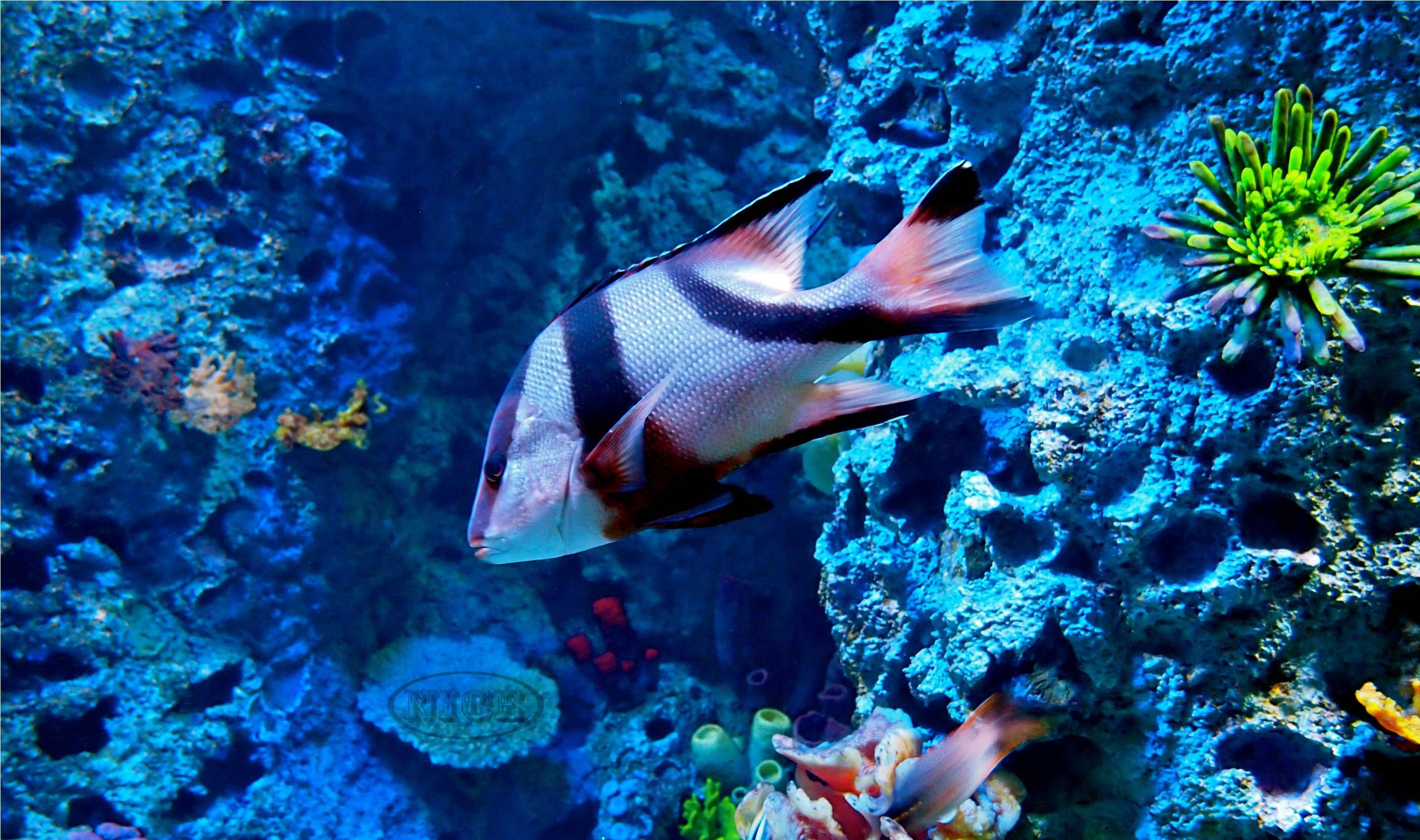 1438 ocean hd wallpapers - photo #34