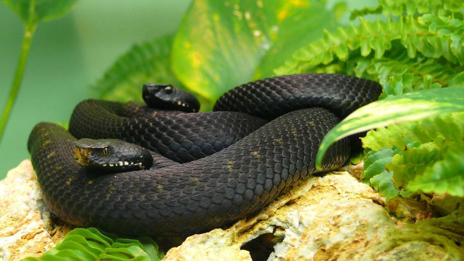 <b>Snake Wallpapers</b> | Best <b>Wallpapers</b>