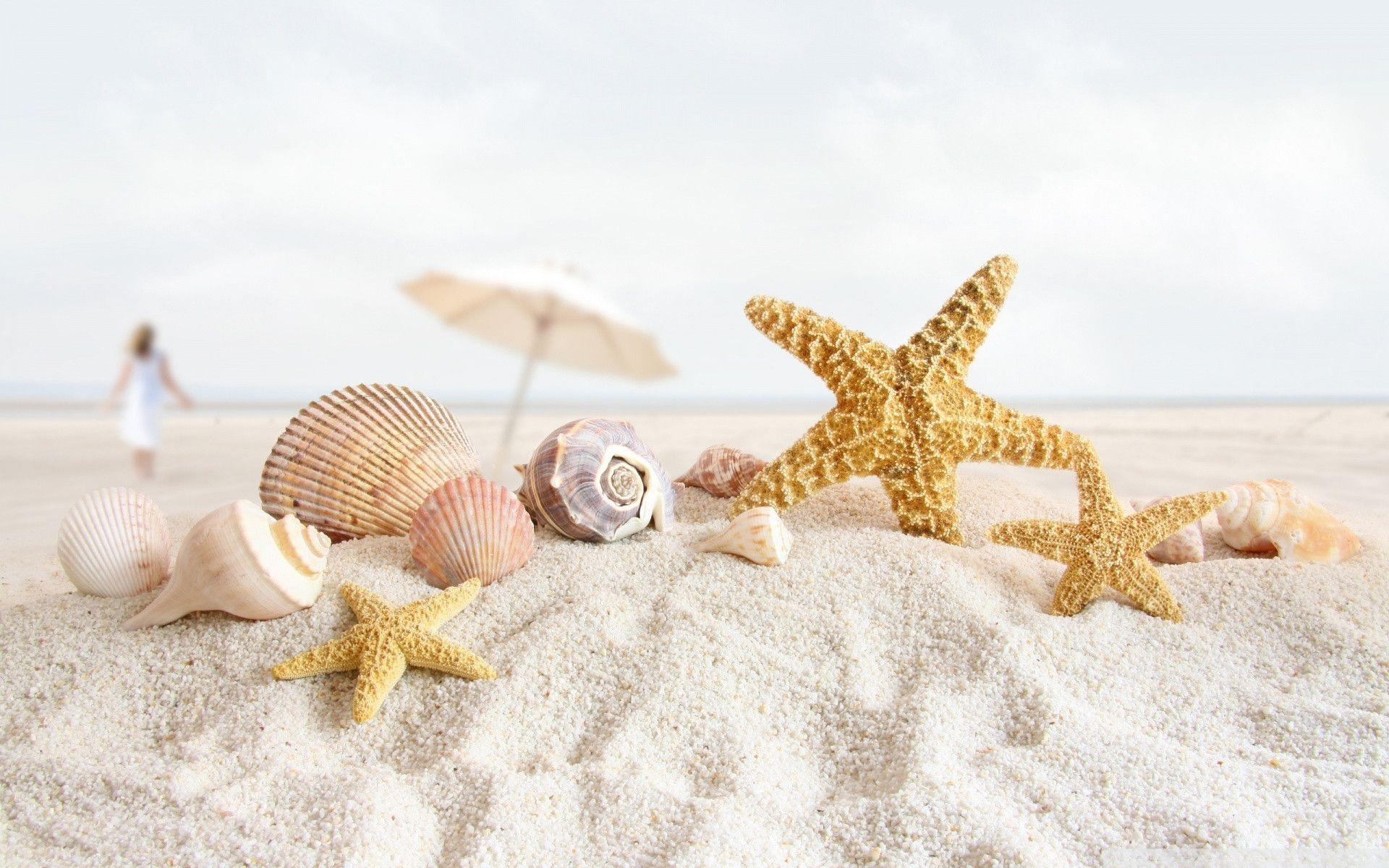 You are viewing the animal wallpapers named Seashell and starsfish