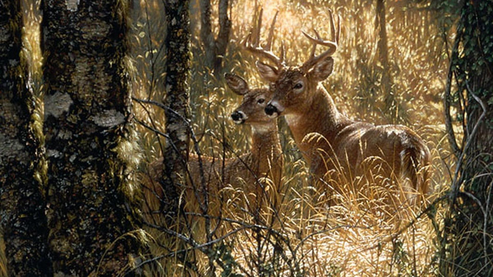 White-tail Deer Wallpapers