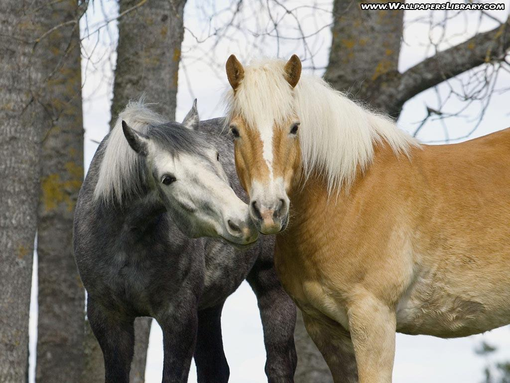 Cute Horse Wallpapers - Wallpaper Cave