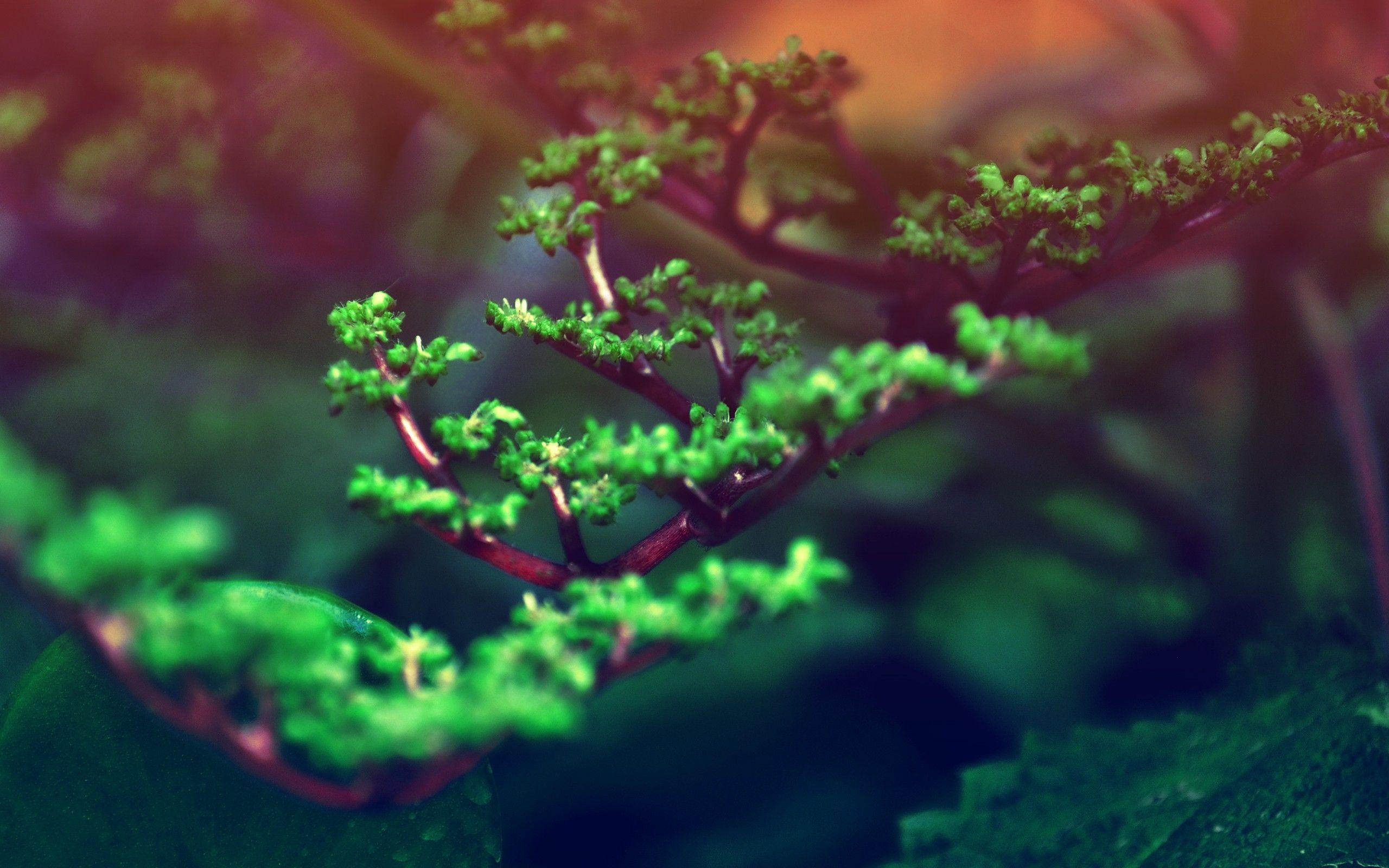 Macro Bonsai Tree Branch widescreen wallpaper | Wide-