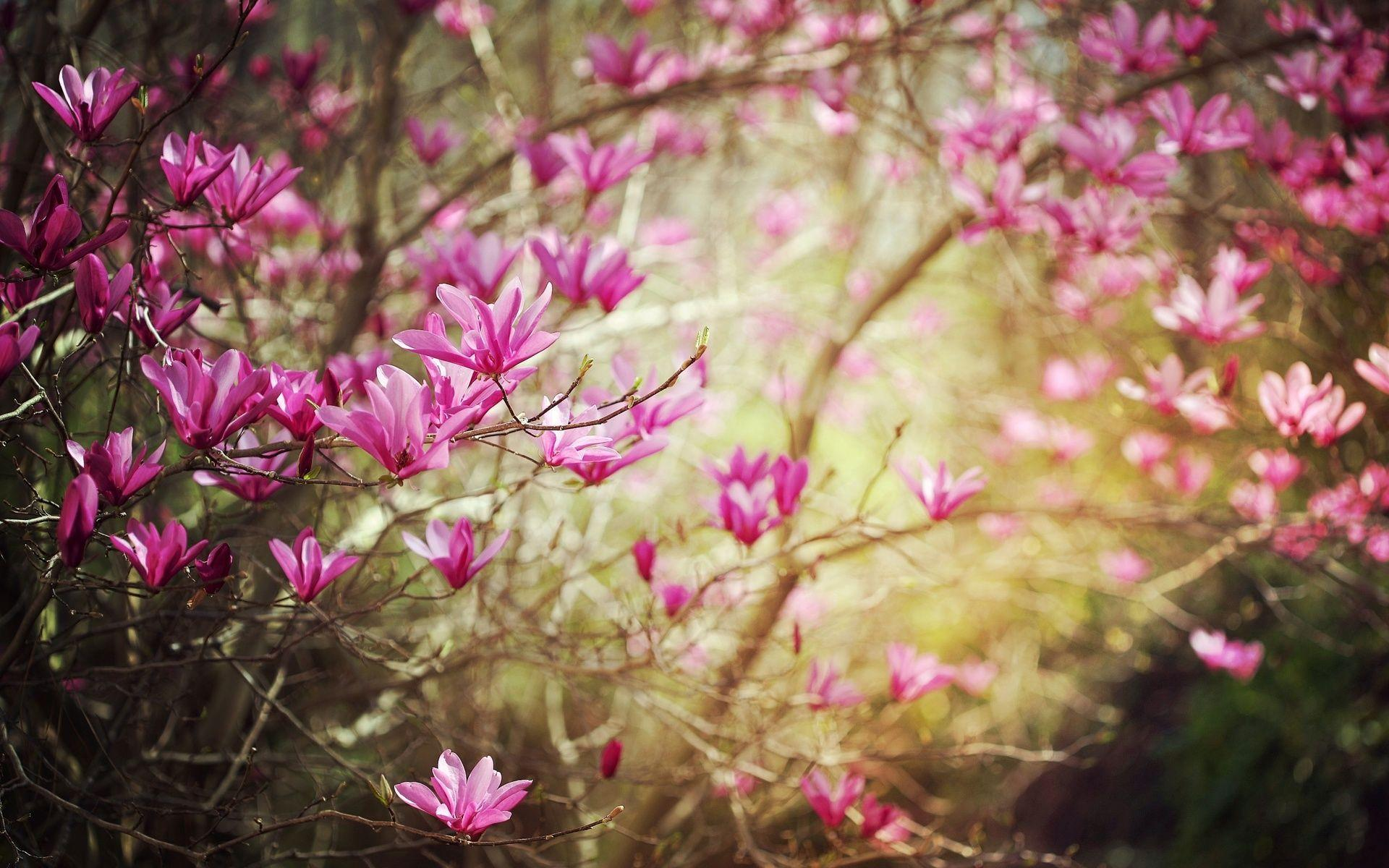 spring nature wallpaper - photo #22