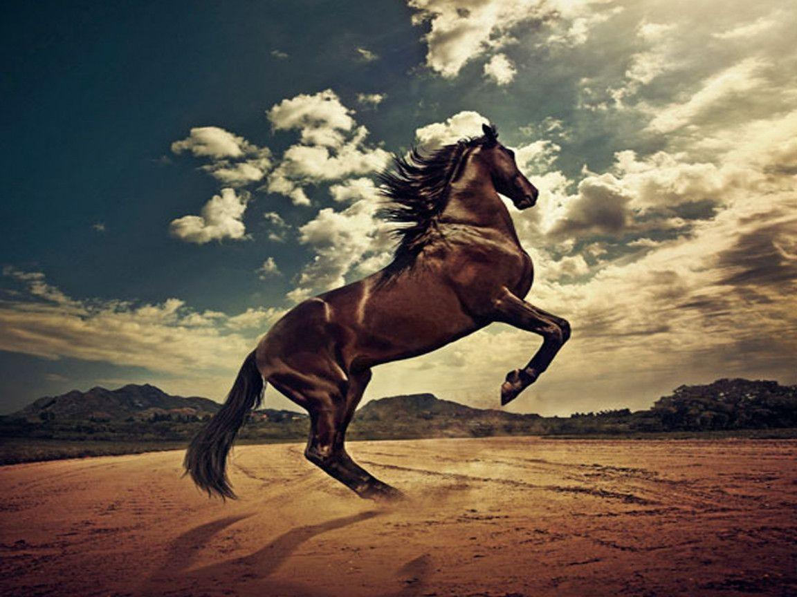 wild horses racing wallpaper - photo #22