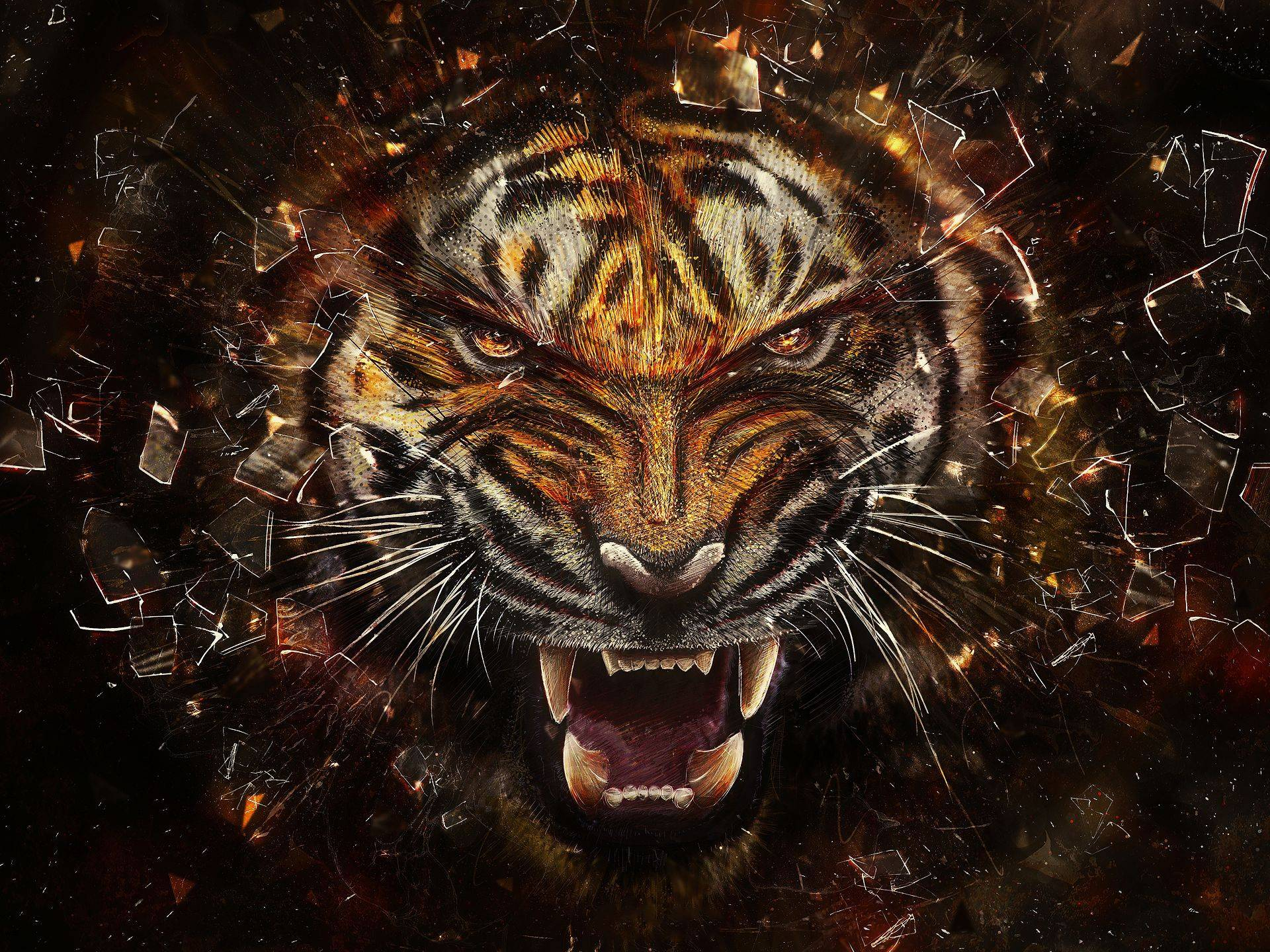 981 Tiger Wallpapers | Tiger Backgrounds
