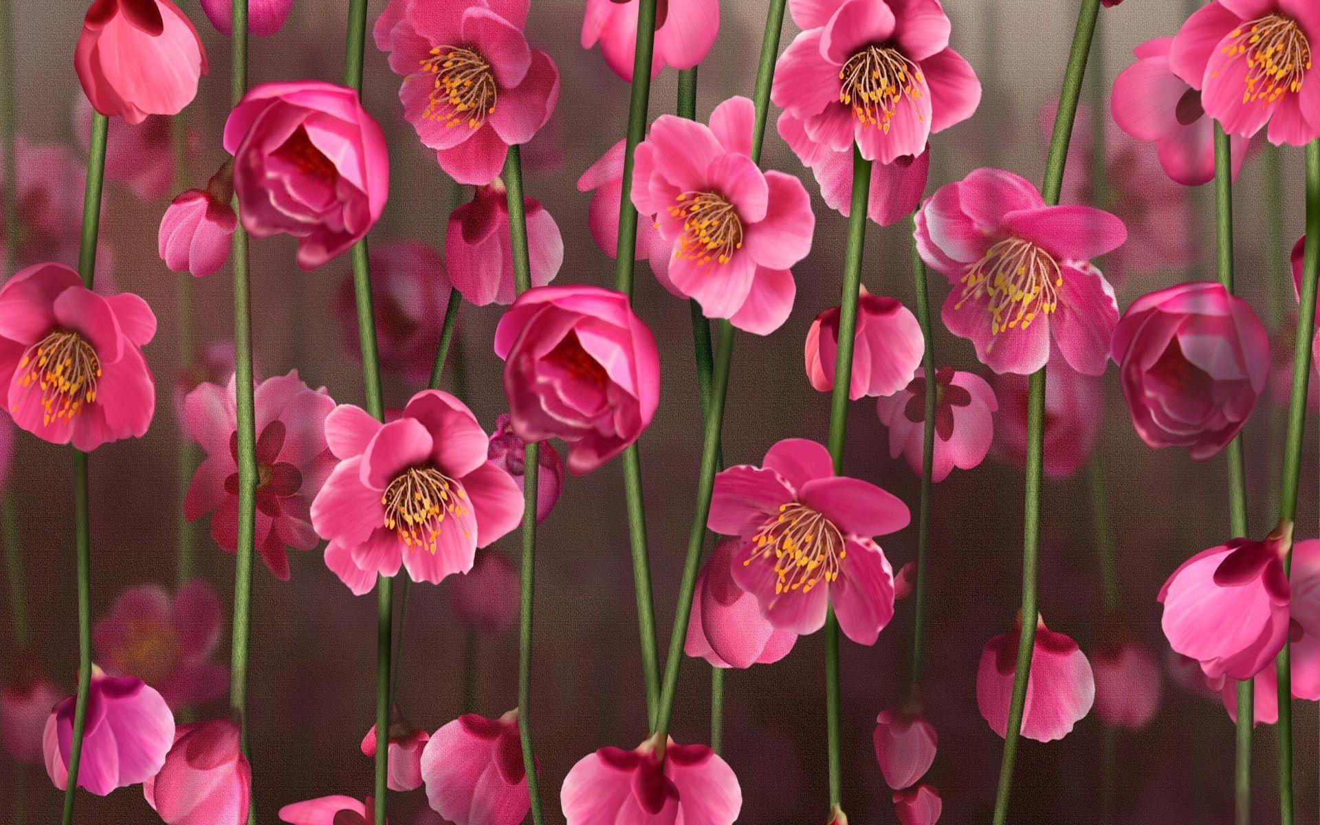 wallpapers pink flowers - photo #23