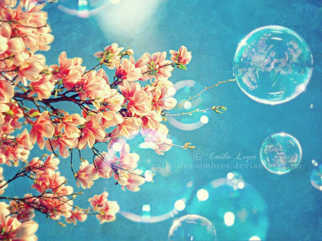 Sweet Spring Flowers Desktop Wallpapers Downloads Free