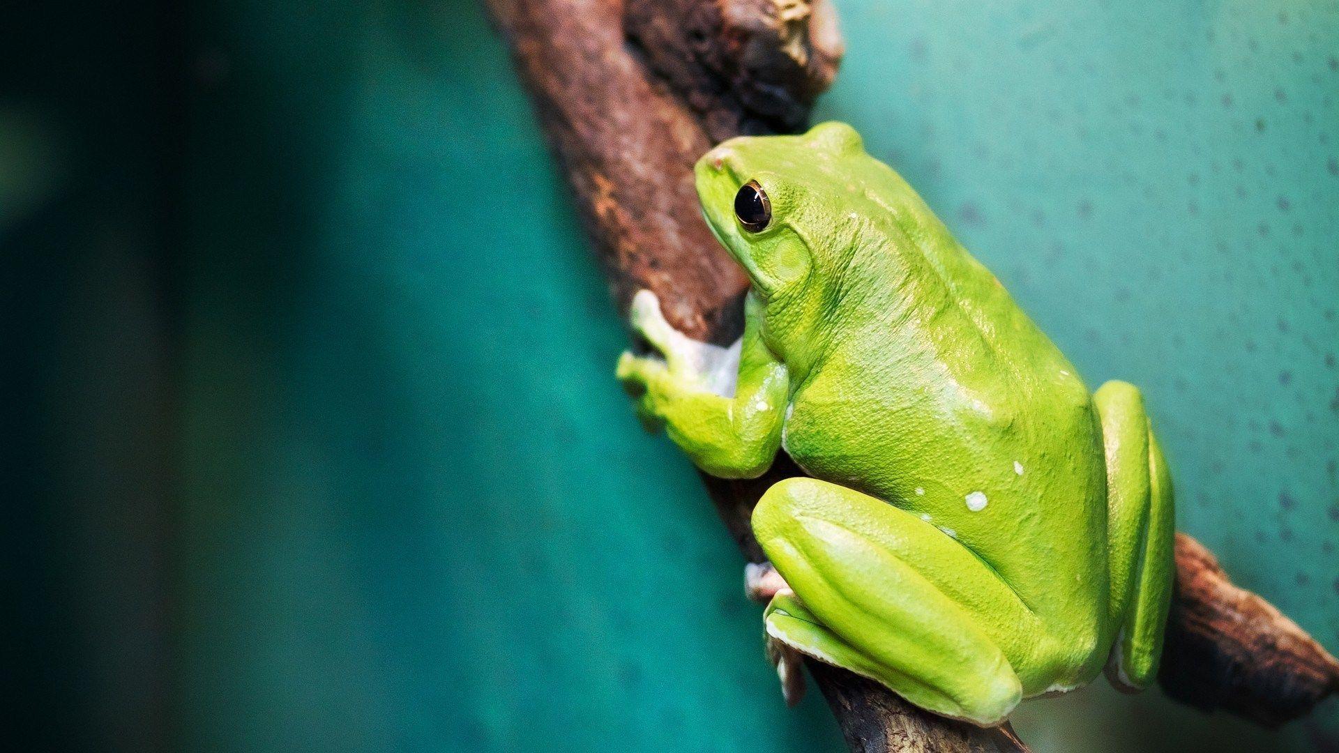 frog wallpapers wallpaper cave