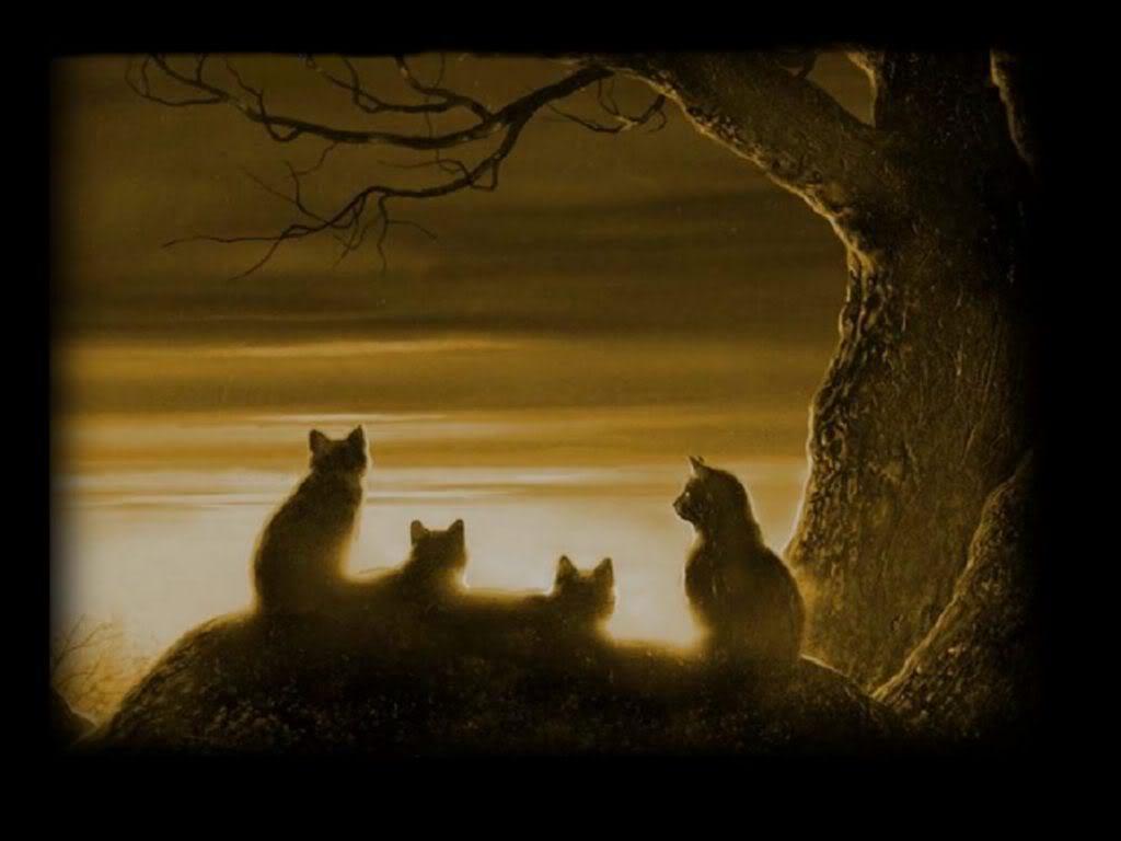 warrior cats wallpapers desktop - wallpaper cave
