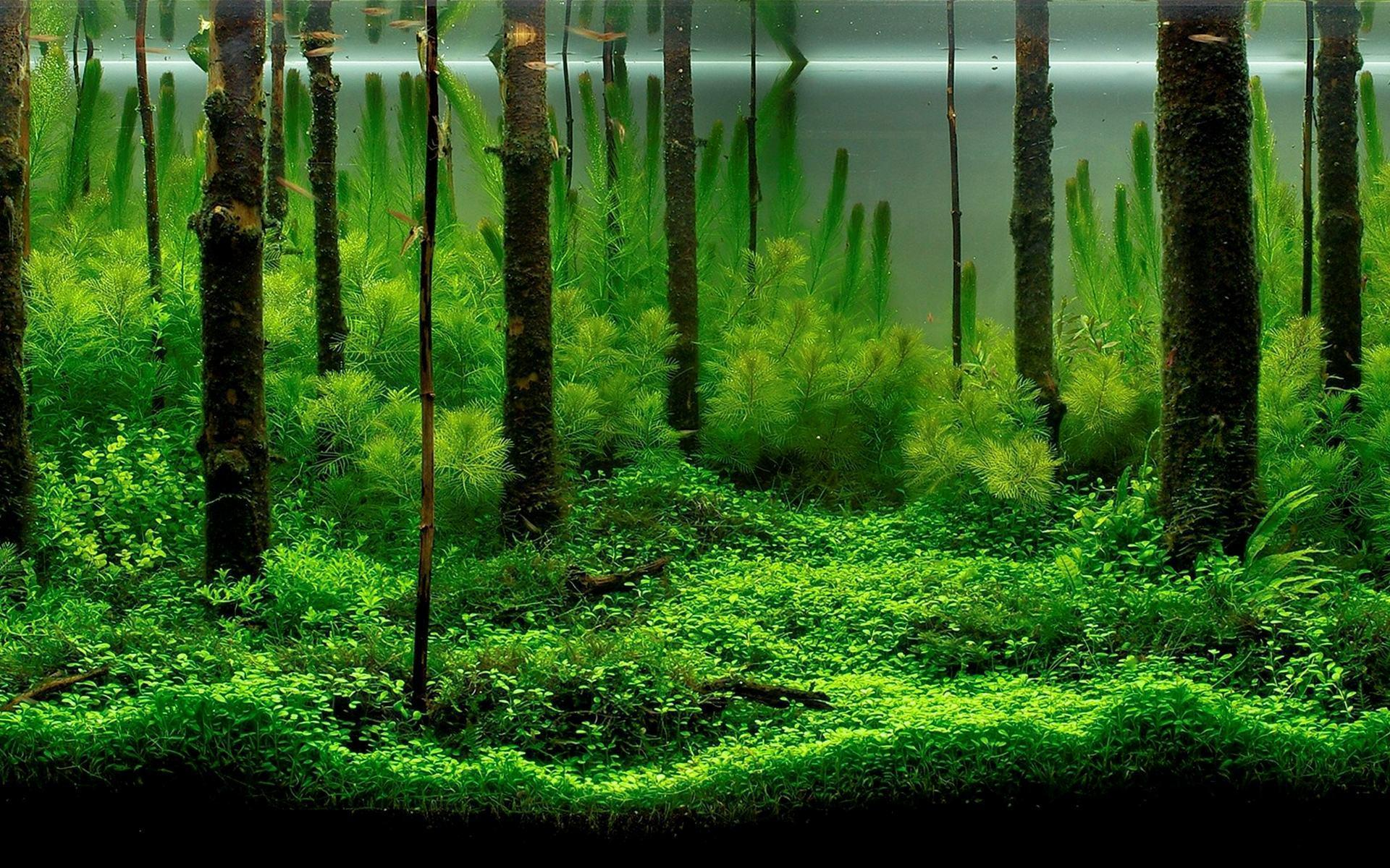 small aquarium backgrounds - Aquarium Backgrounds Design Ideas ...