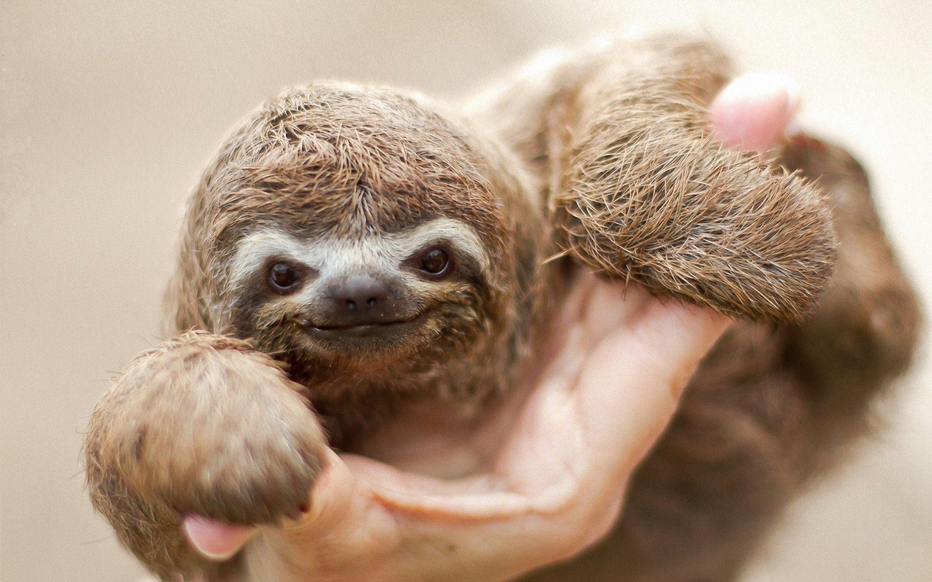 5 Sloth Wallpapers