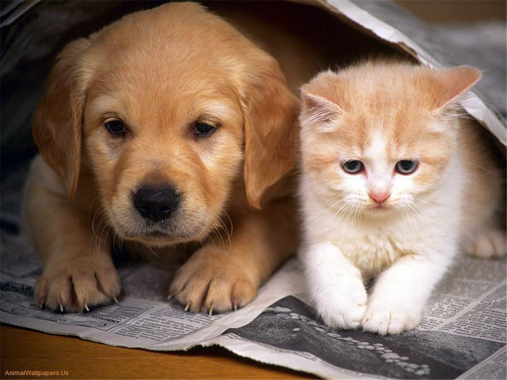 Puppy And Kitten Wallpapers Wallpapers