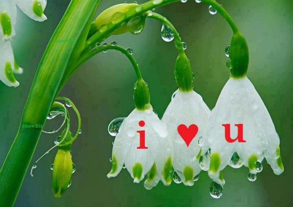 Beautiful Love Flower HD Wallpaper