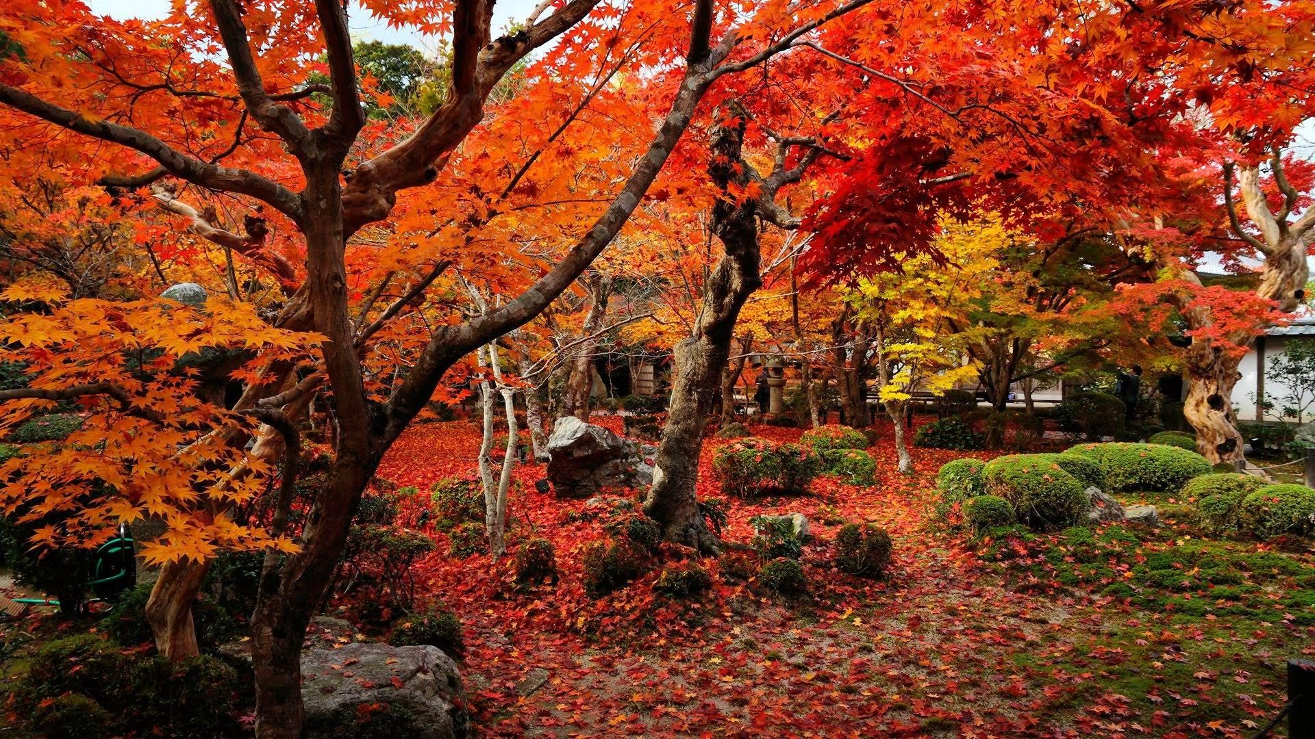 Fall Colors Wallpapers - Wallpaper Cave
