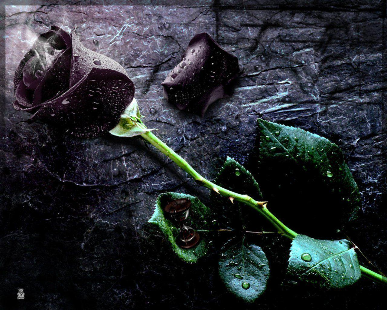 Black Rose Wallpapers - Wallpaper Cave