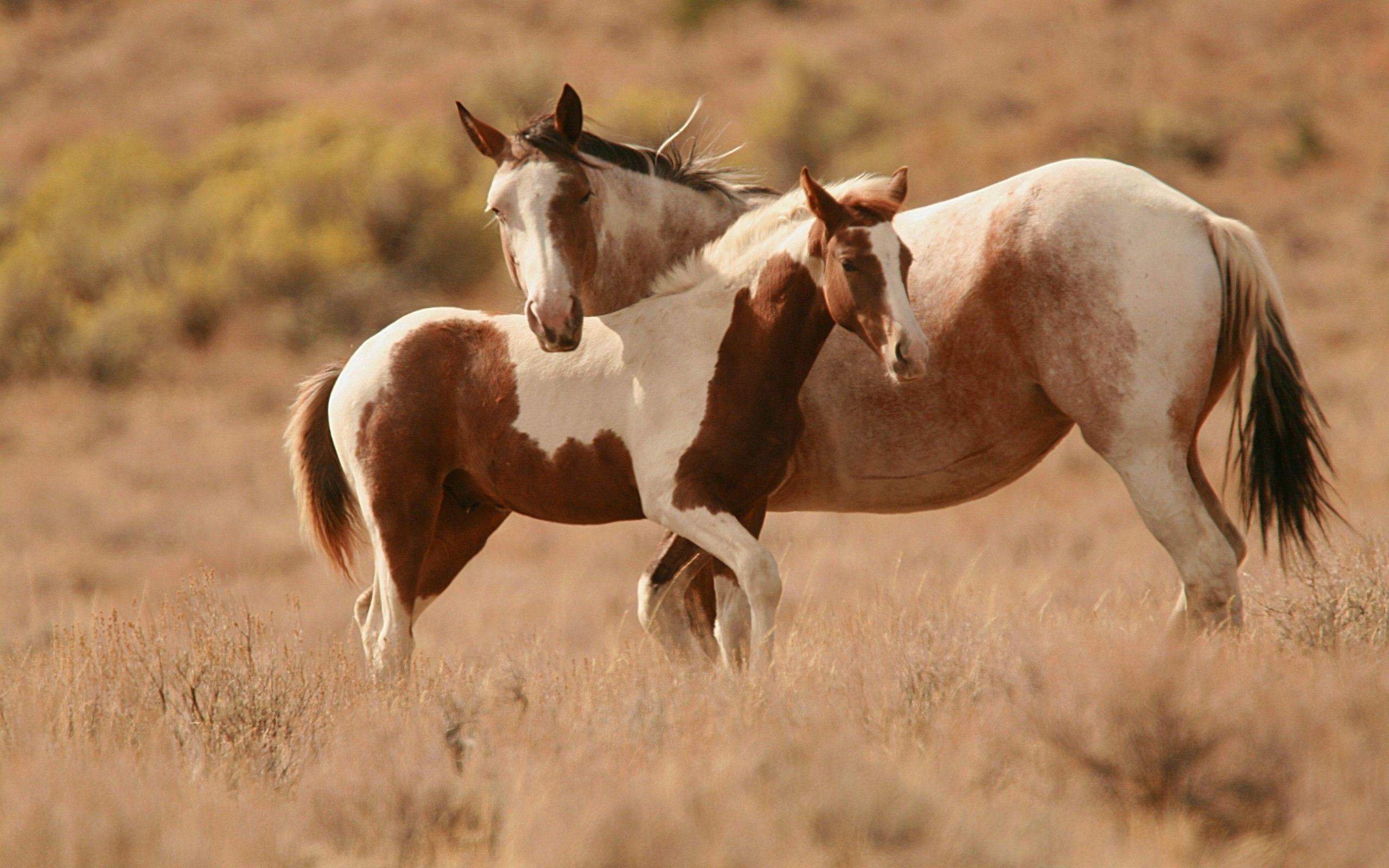 Paint Horse Wallpapers Wallpaper Cave