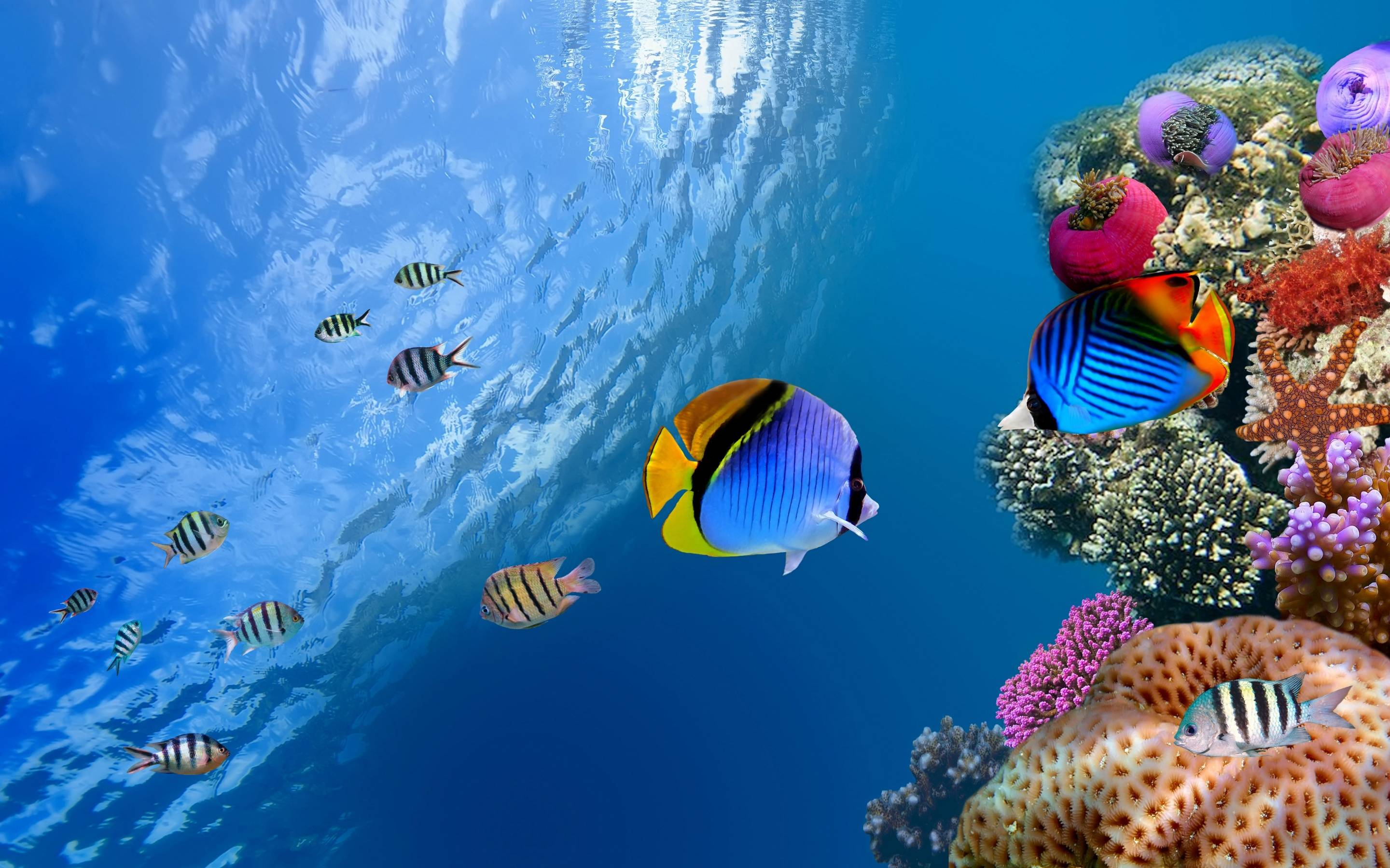 Underwater Wallpapers - Full HD wallpaper search
