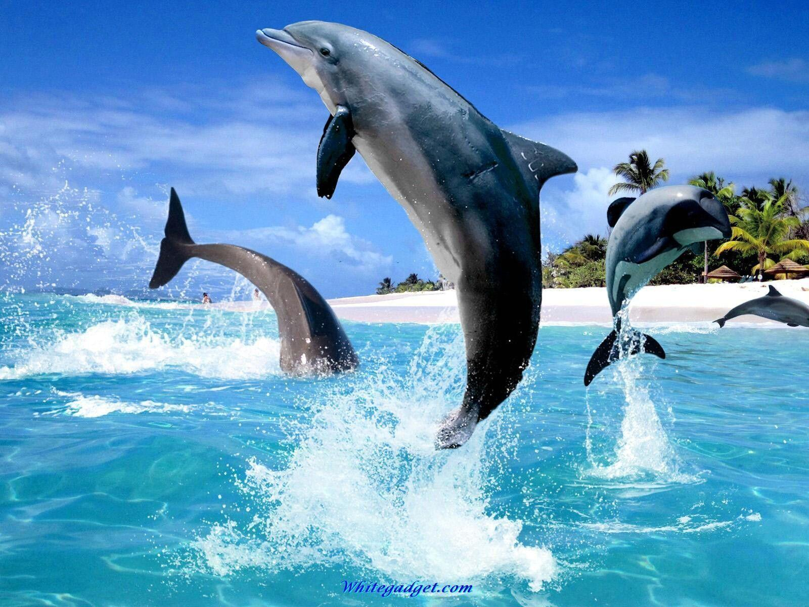 Jumping Dolphin - Animals Wallpapers
