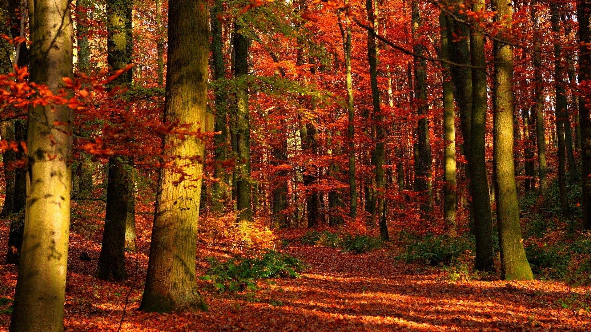 fall wallpaper widescreen monitor - photo #21
